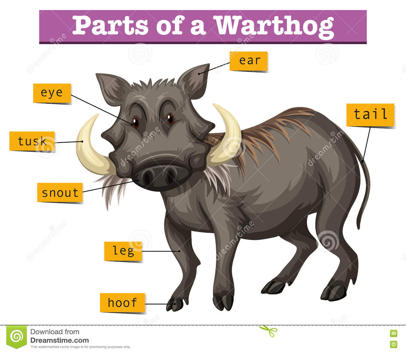 Diagram Showing Parts Of Warthong Stock Vector - Illustration of