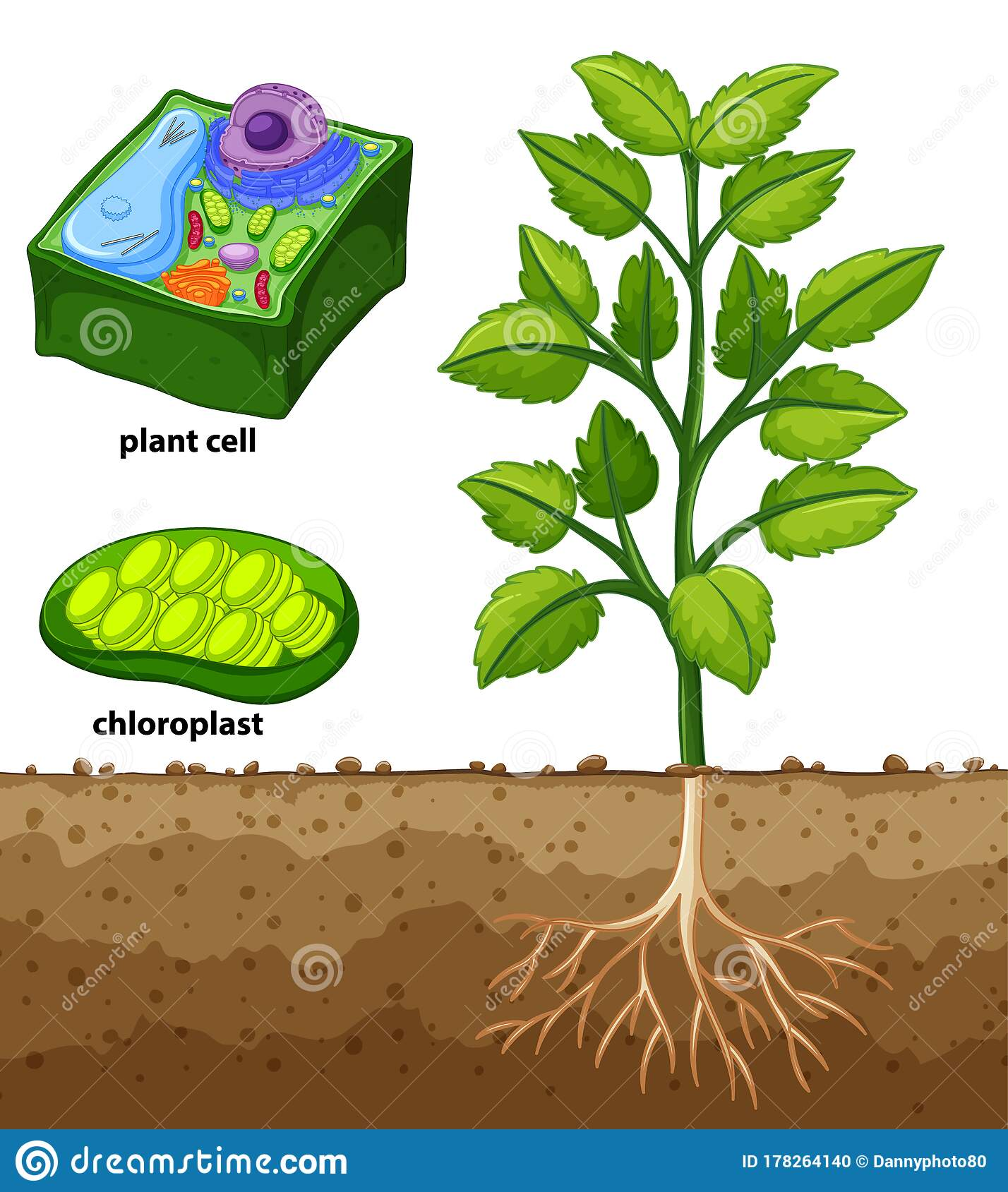 Diagram Showing Plant Cell And Tree In The Ground Stock Vector