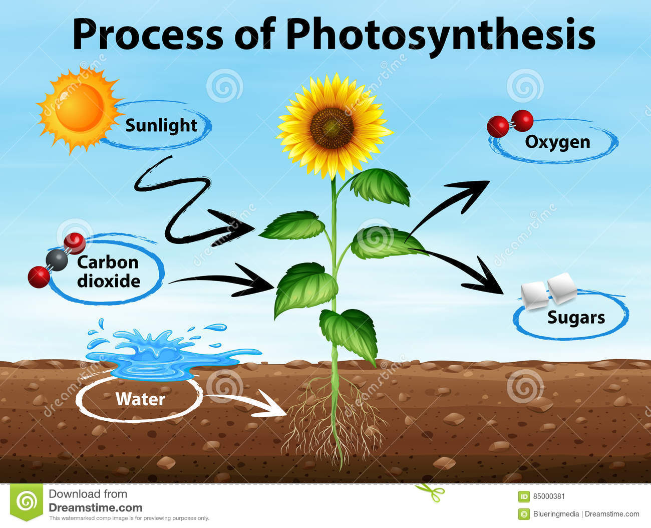 reflection on how photosynthesis is a process