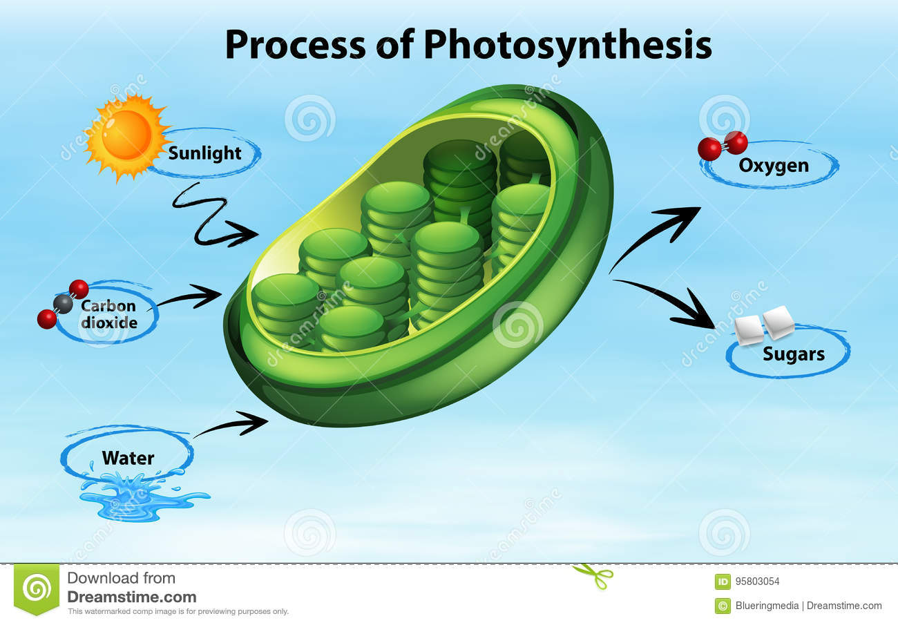 How is the process of photosynthesis going help me please