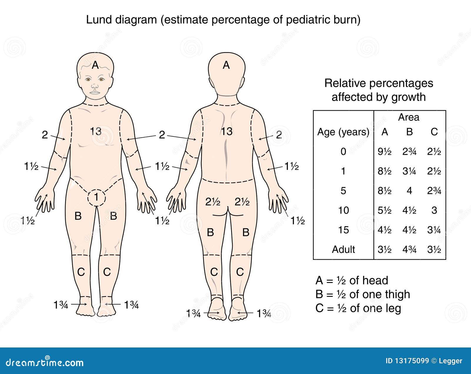 Diagrama de Lund ilustración del vector. Ilustración de ciencia ...