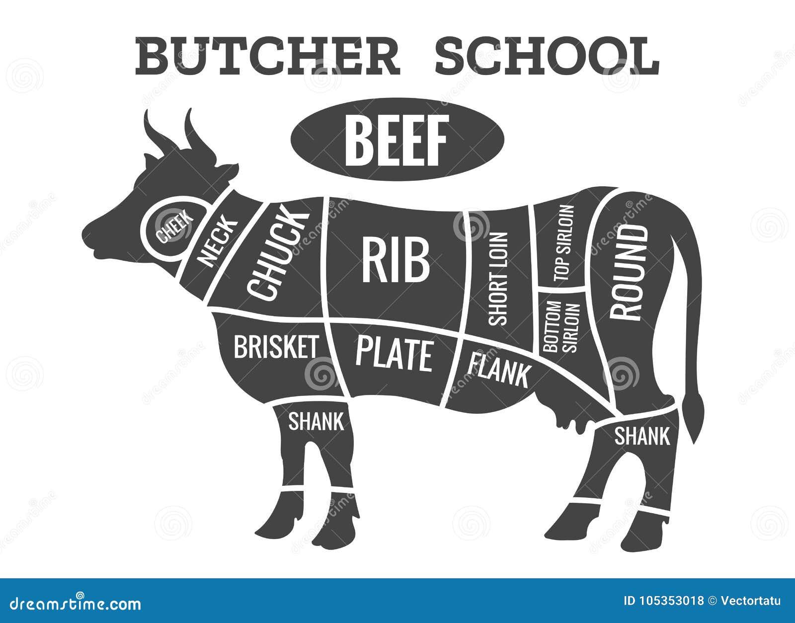 Diagrama del carnicero de la vaca
