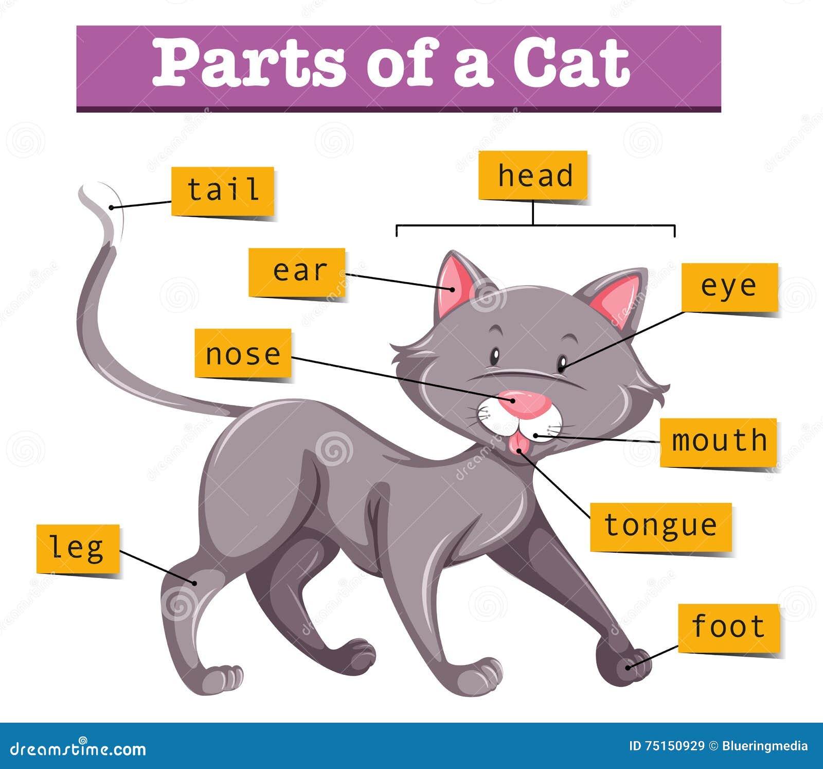 Diagrama que mostra partes do gato