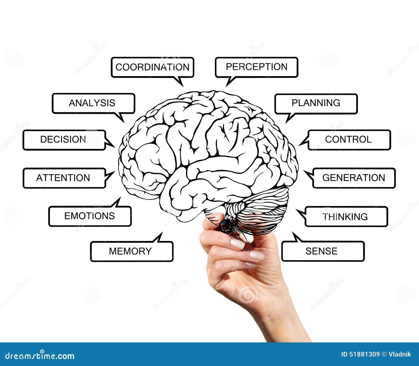Gemütlich Gehirn Diagramme Ideen - Menschliche Anatomie Bilder ...