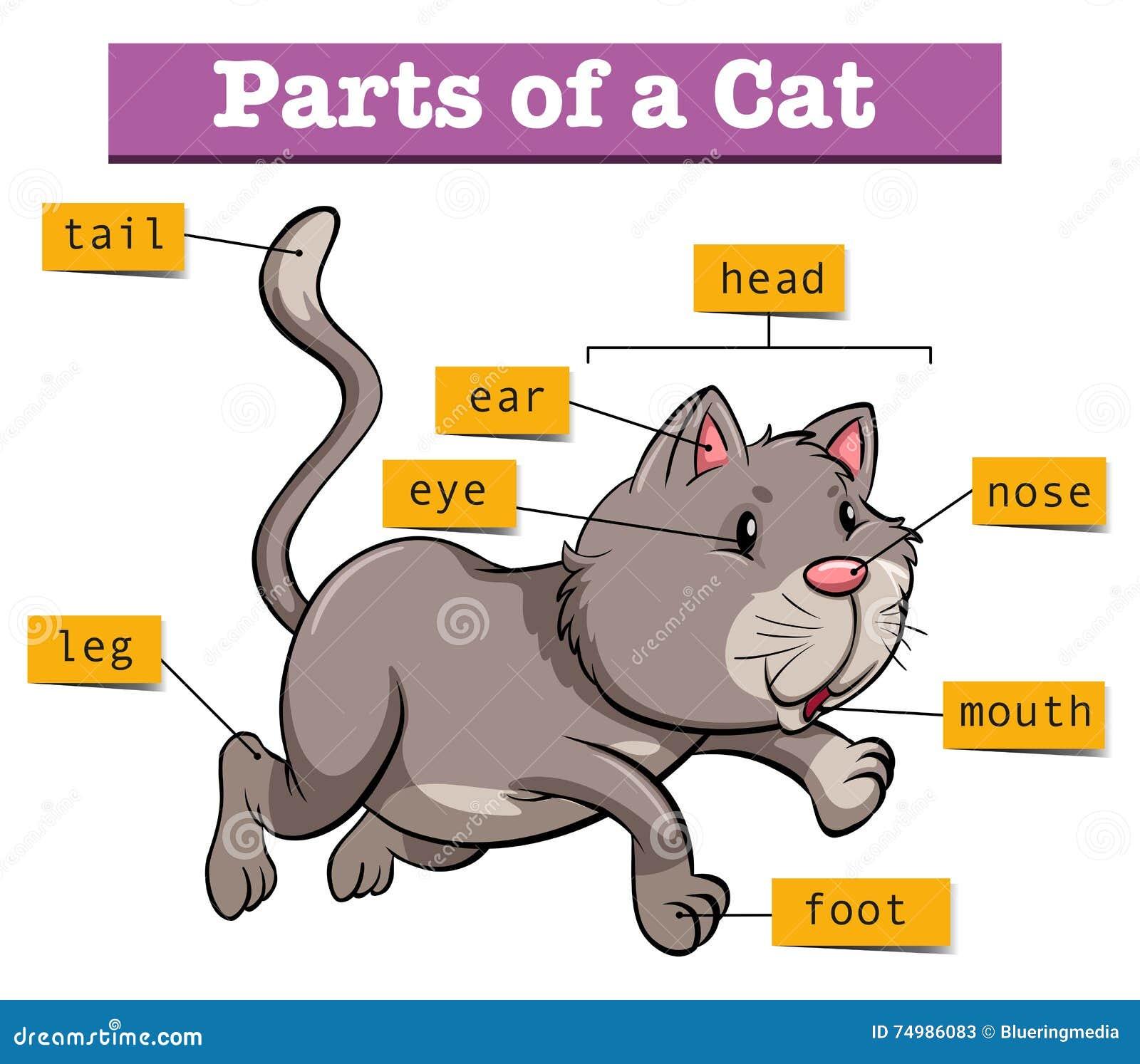 Diagramme montrant des parties de chat