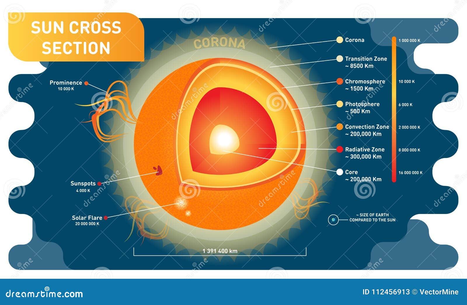 Diagramme Scientifique En Coupe Dillustration De Vecteur De Sun