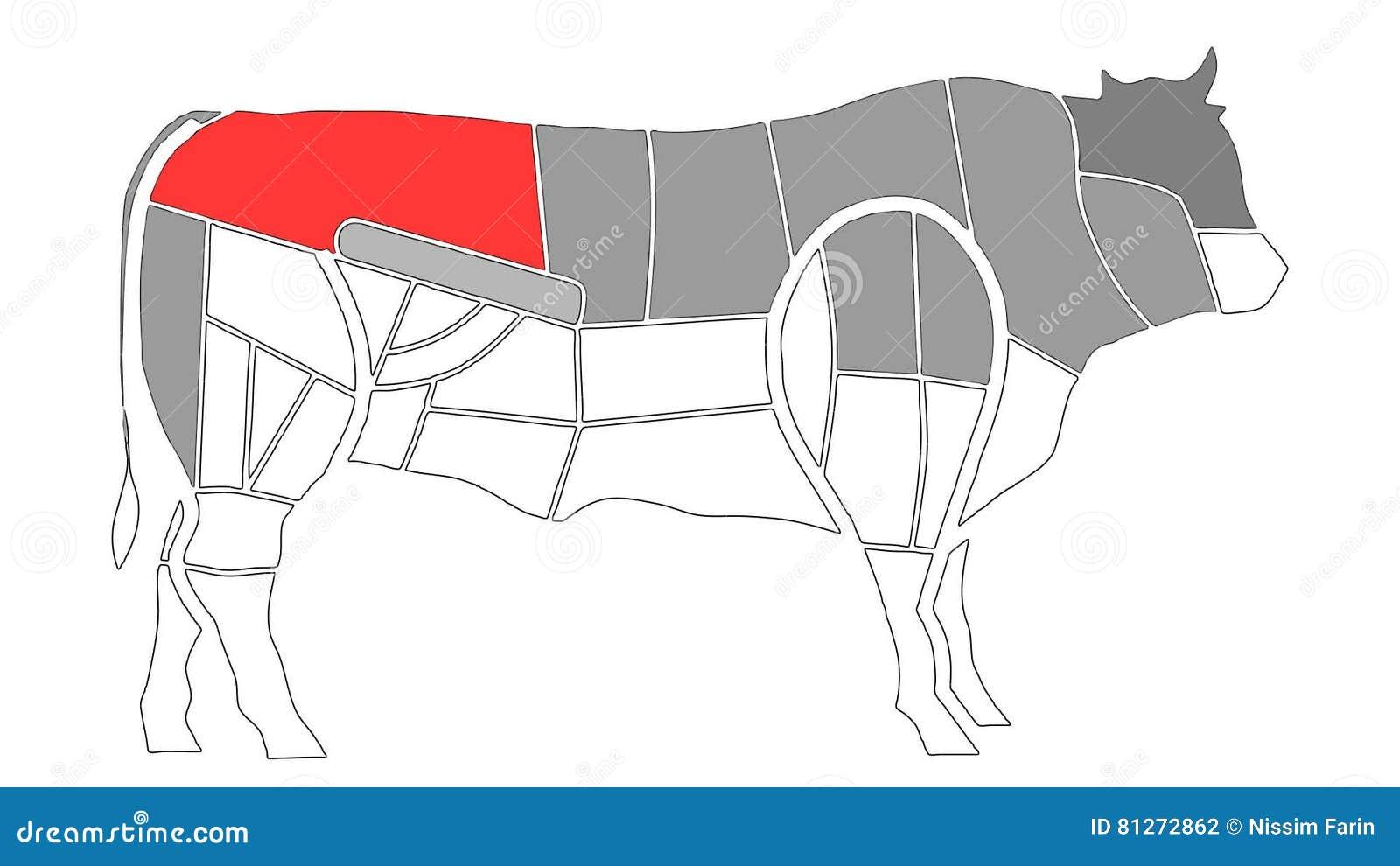 Diagramme Von Kuh-Körper-Anatomie Zu Den Küche-Zwecken In Alpha ...