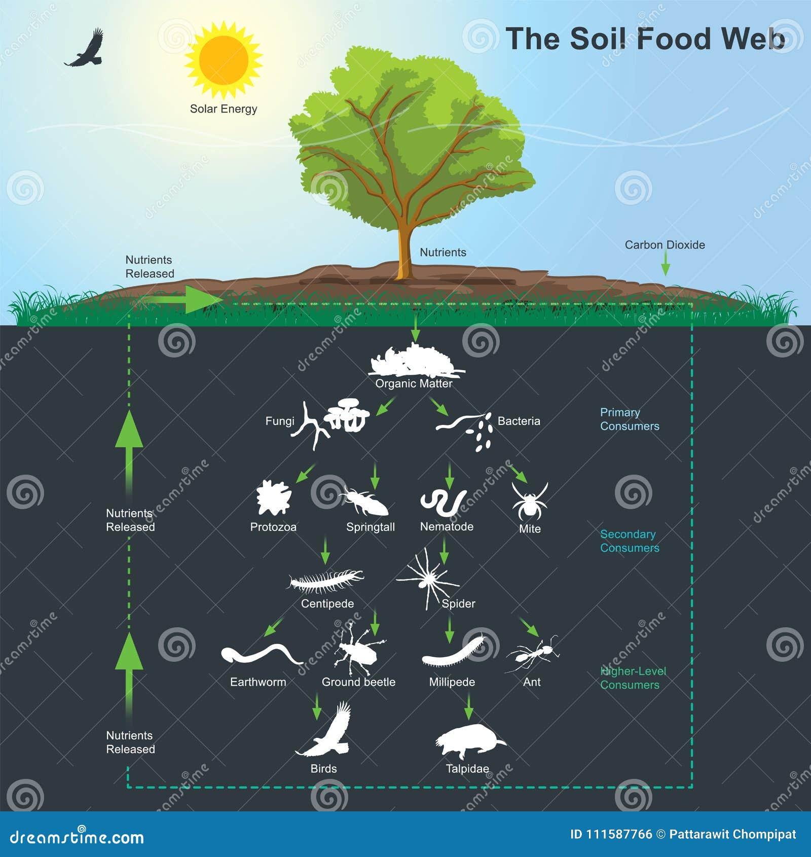 Diagrammet för jordmatrengöringsduk Informationsdiagram om illustration