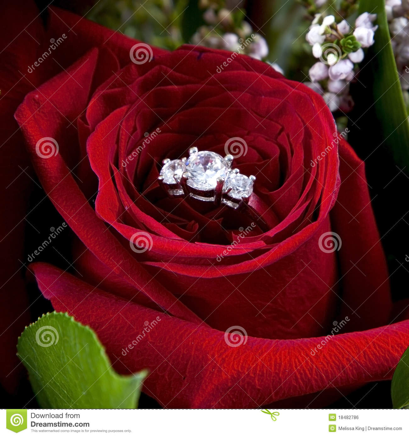 Diamond Ring In Red Rose Royalty Free Stock Image Image