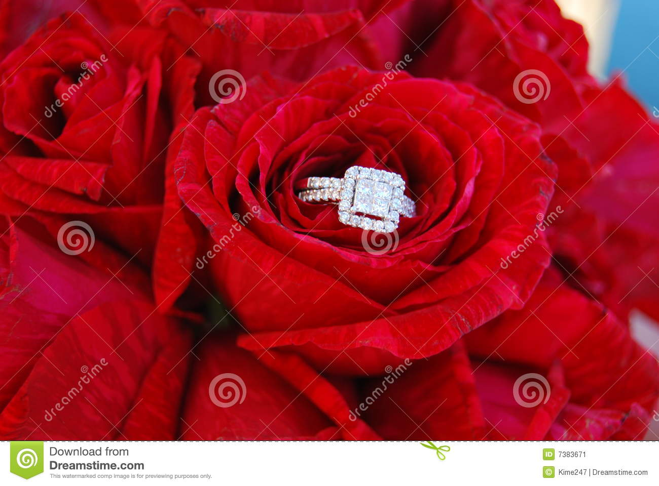 Diamond Ring In Red Roses Stock Image Image 7383671