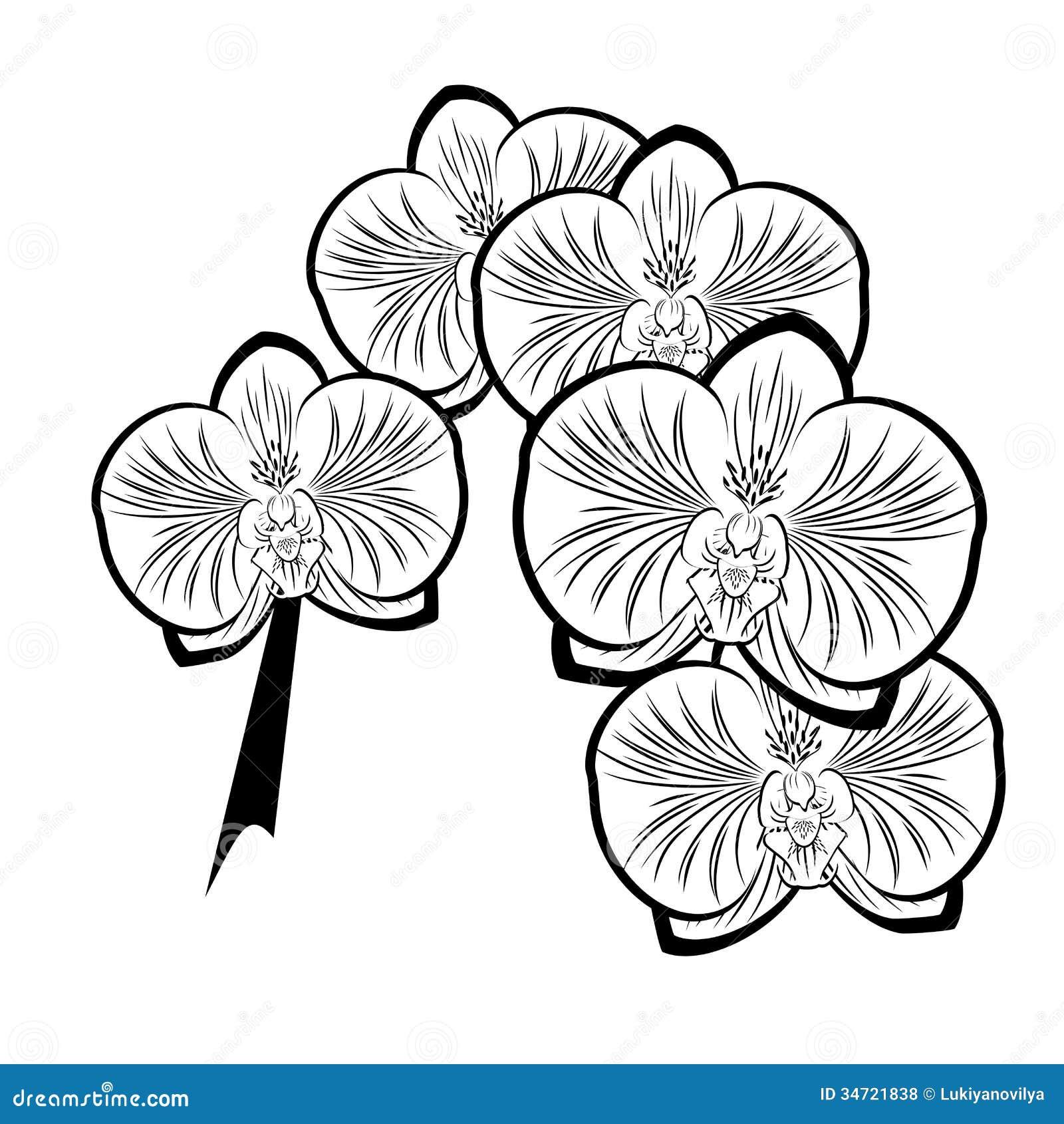 Dibujo Blanco Y Negro De Las Flores De La Orquídea Ilustración del ...
