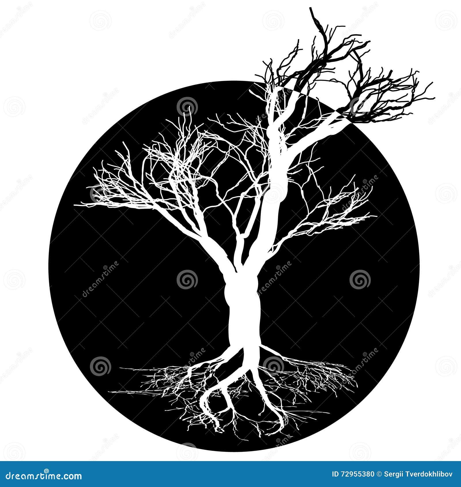 Dibujo Blanco Y Negro Del árbol De Hoja Caduca Silueta Negra En Un