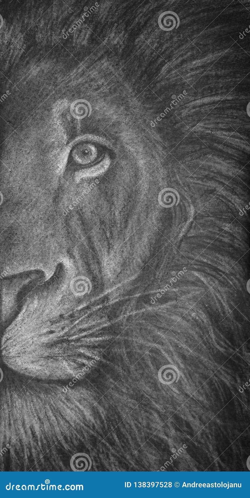 Dibujo de carbón de leña de la mitad-cabeza de un león, retrato del animal salvaje en blanco y negro, felino