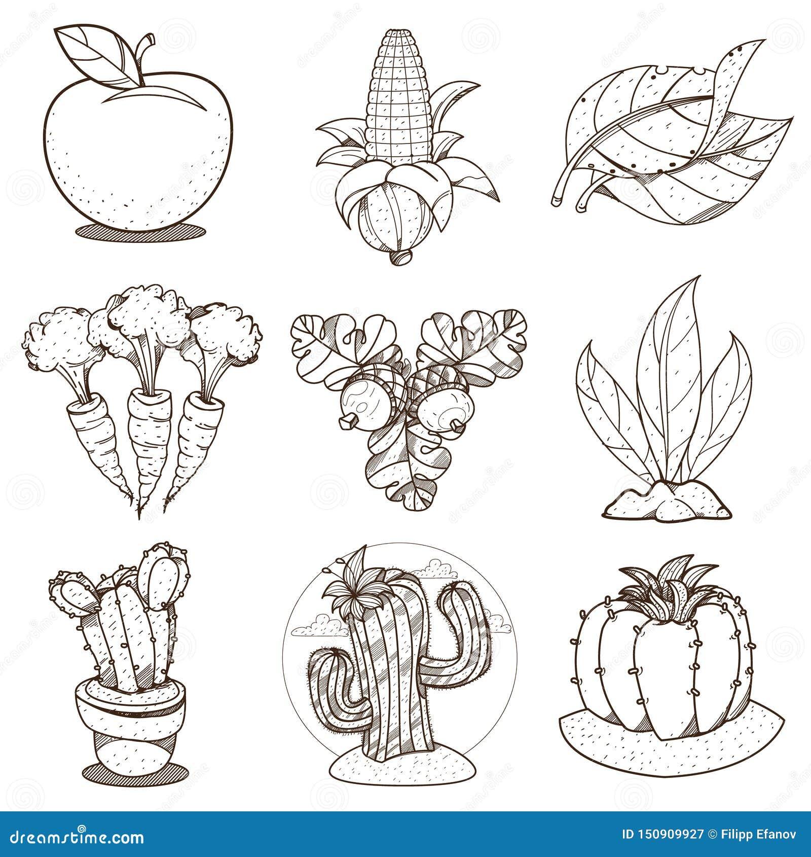Dibujo De Esquema Para Colorear En El Cultivo Apple Maiz