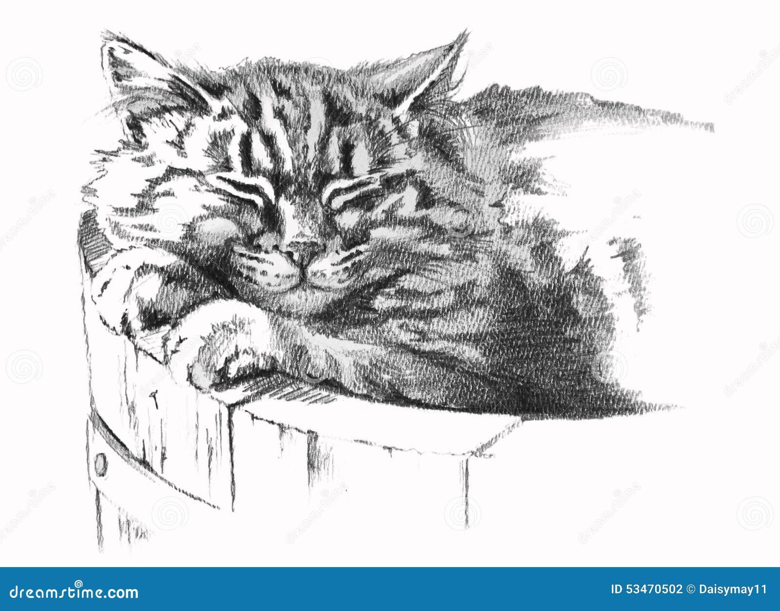 Dibujo de lápiz del gato