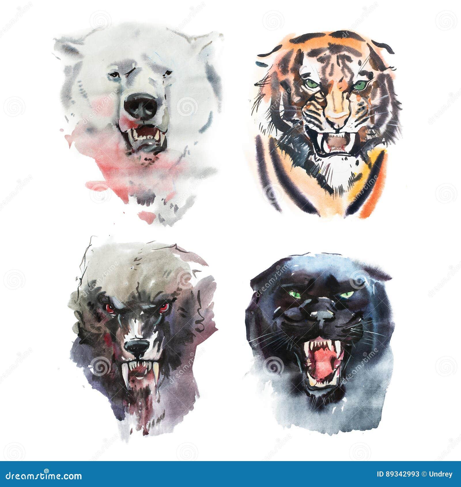 Dibujo de la acuarela del oso, del tigre, del lobo y de la pantera de mirada enojados Retrato animal en el fondo blanco