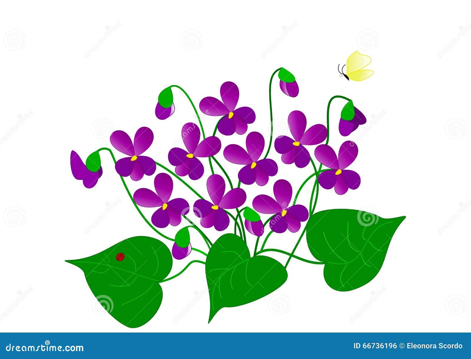 Dibujo de violetas