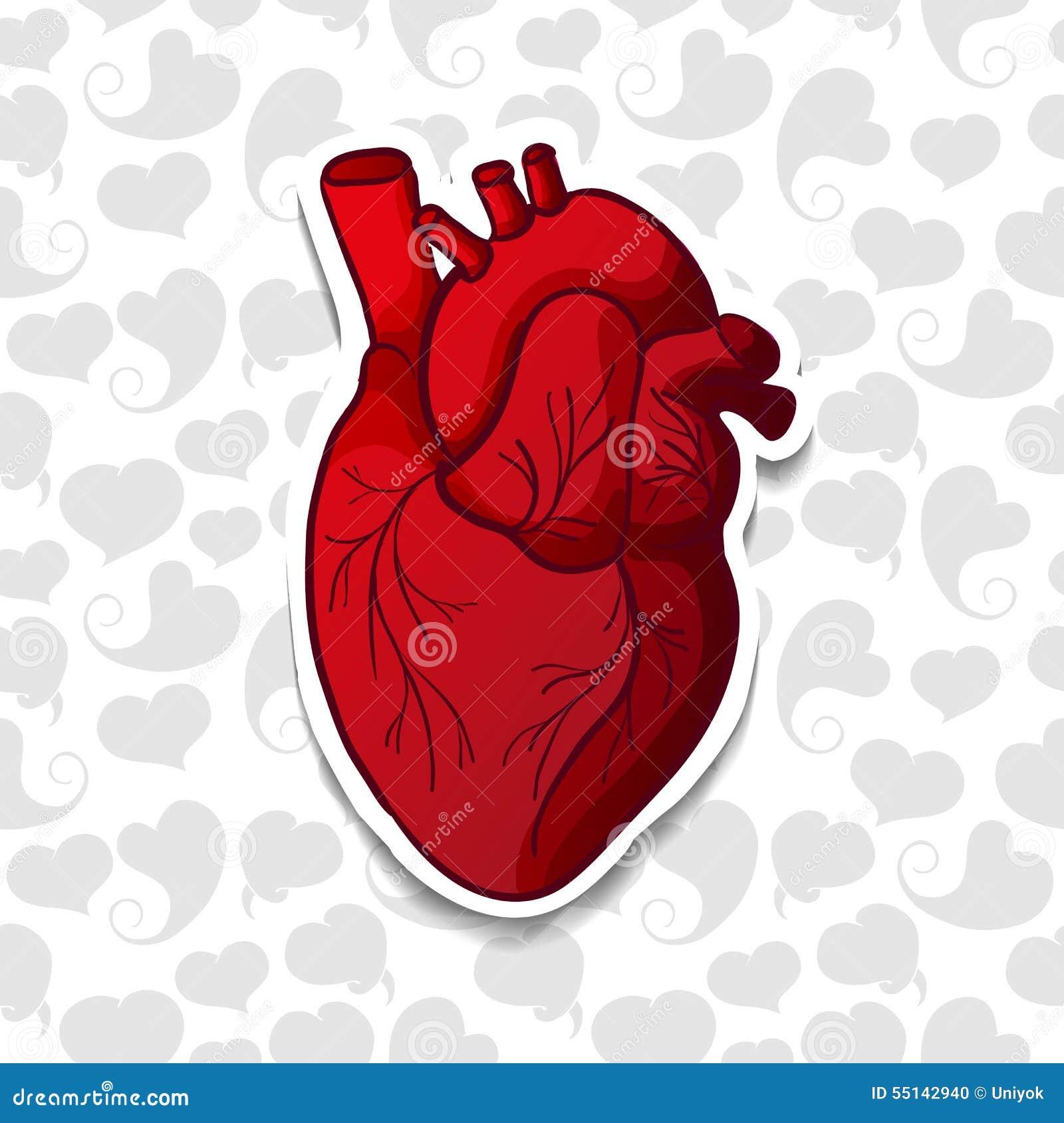 Dibujo Del Corazón Humano En Modelo Del Fondo De Ilustración Del