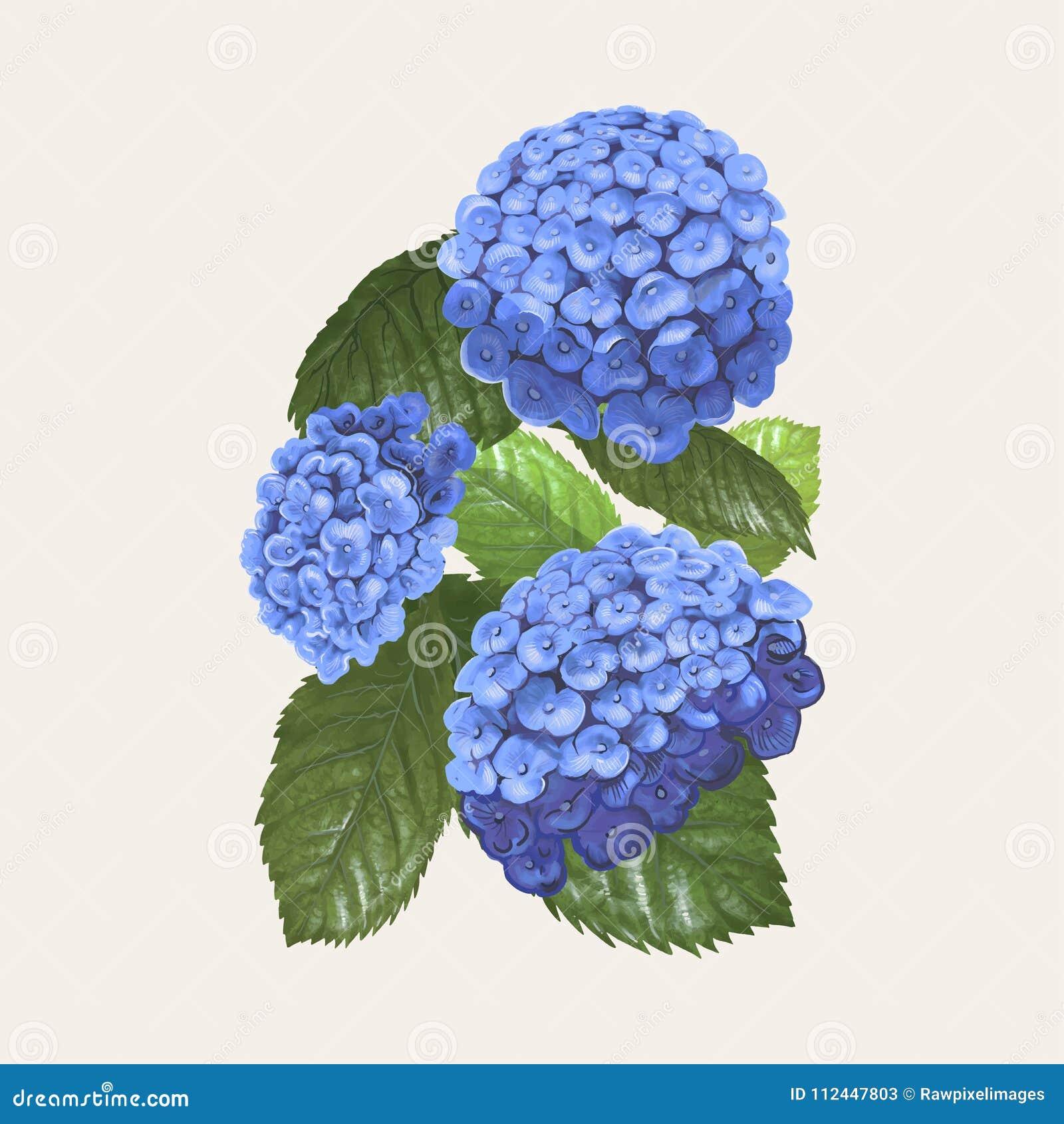 Dibujo Del Ejemplo De Las Flores De La Hortensia Stock De