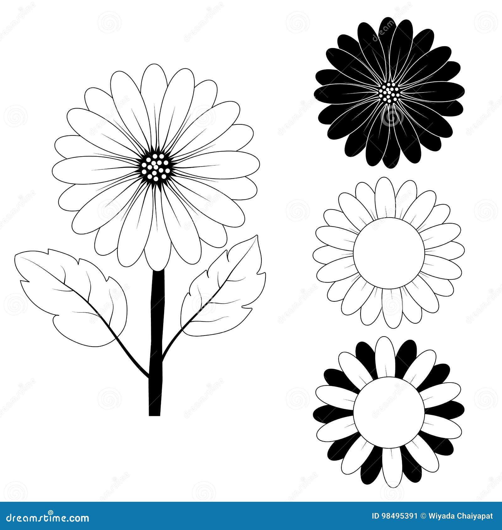 Dibujo Del Girasol Blanco Y Negro Stock De Ilustración Ilustración