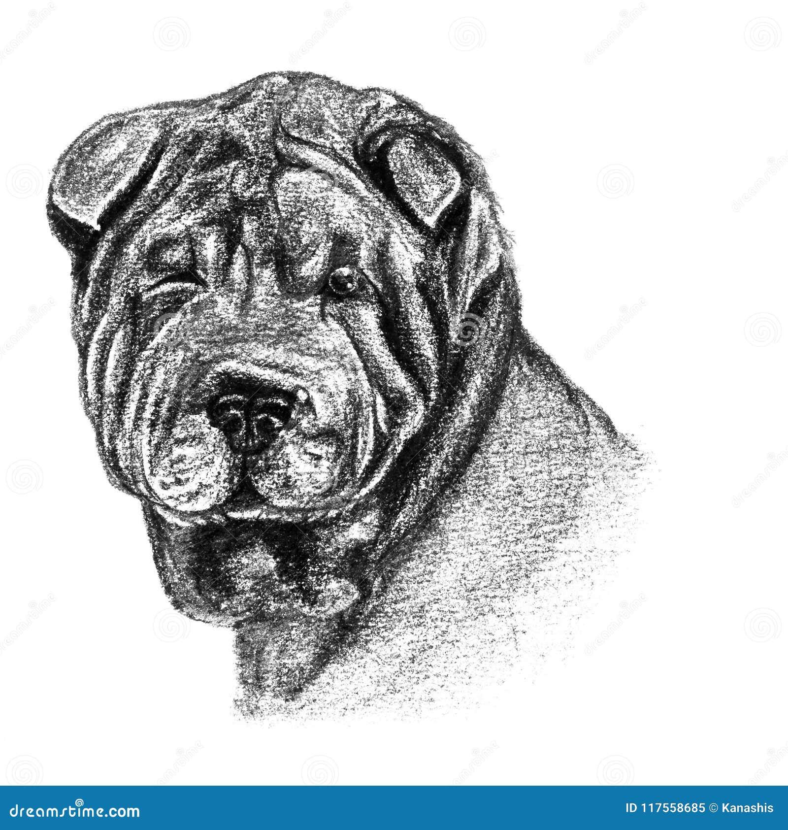 Dibujo Del Lápiz Y De Carbón De Leña De Un Perro De Sharpei Stock De