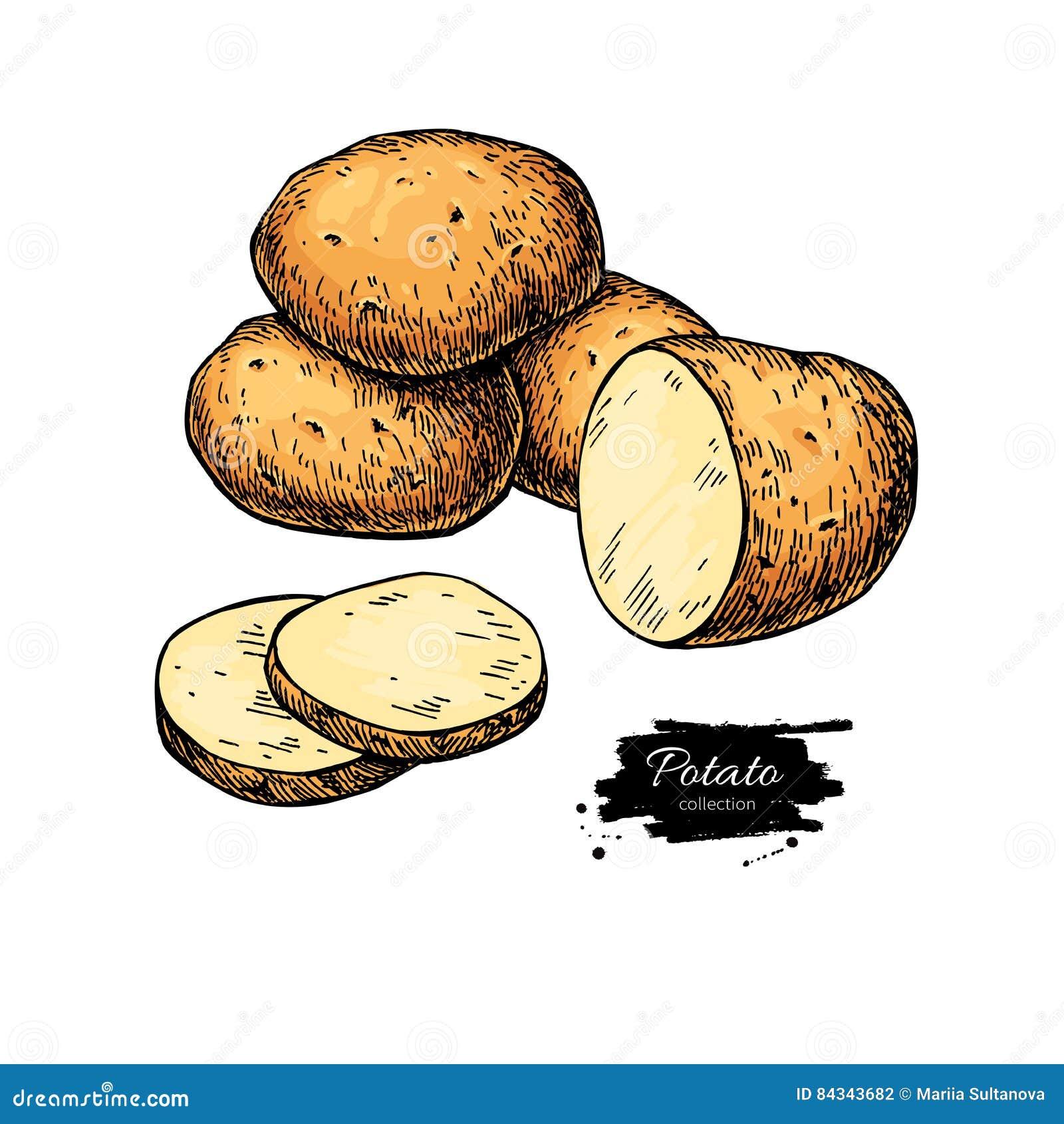 Dibujo Del Vector De La Patata Patatas Dibujadas Mano Aisladas