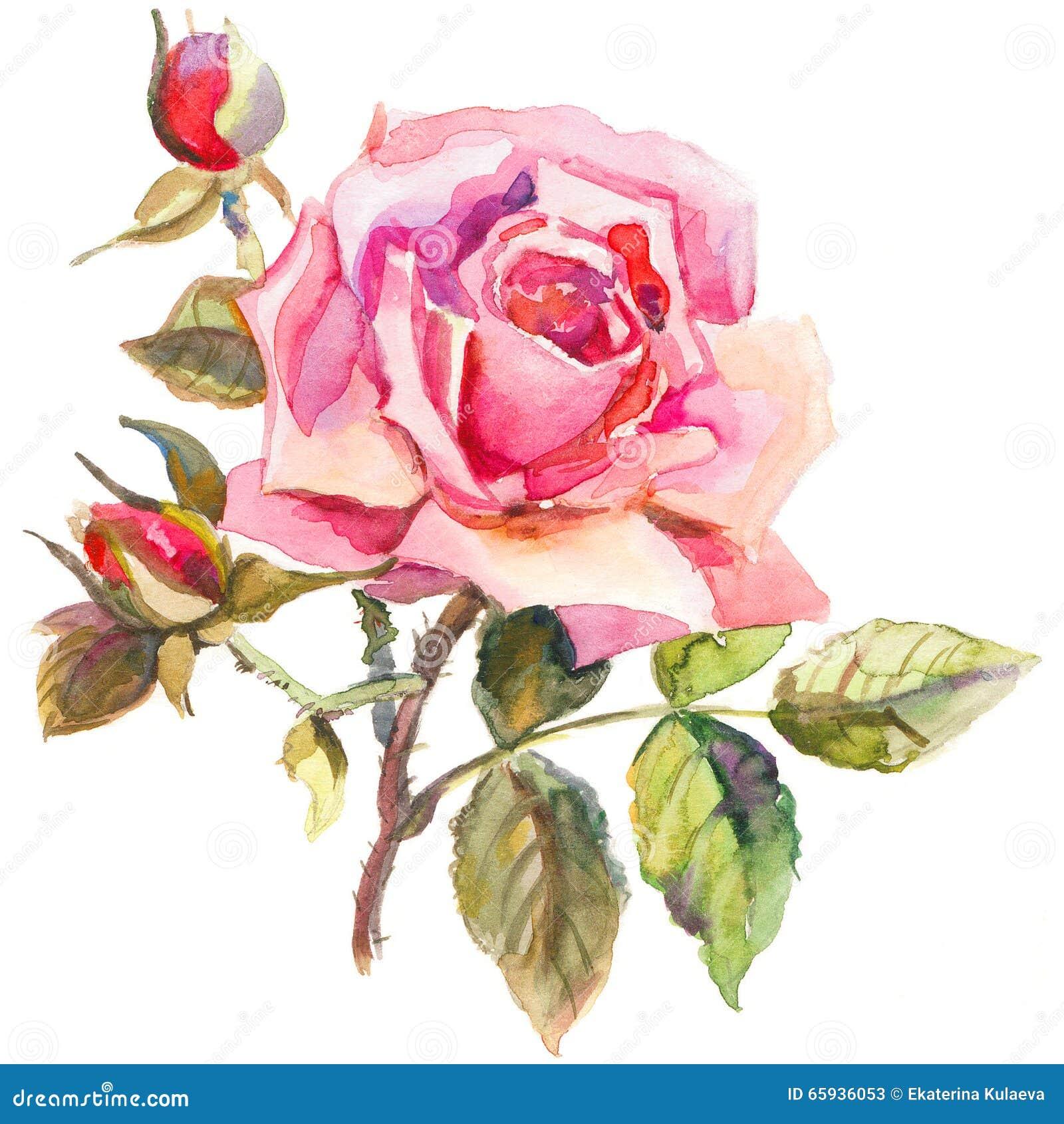 Dibujo Elegante De La Flor Color De Rosa En Estilo De La Acuarela