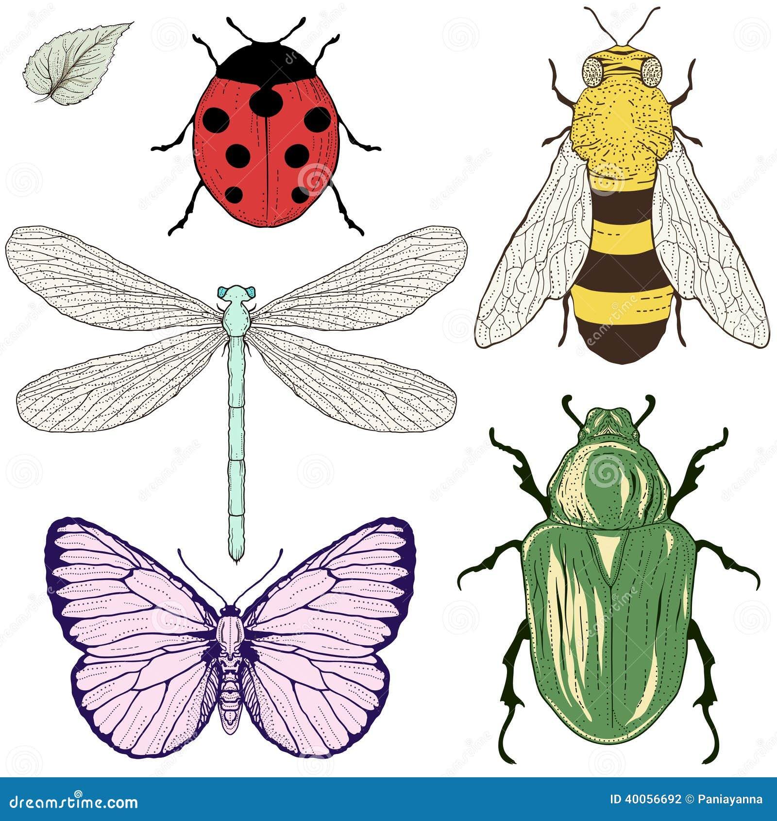 Dibujo Fijado Insectos...