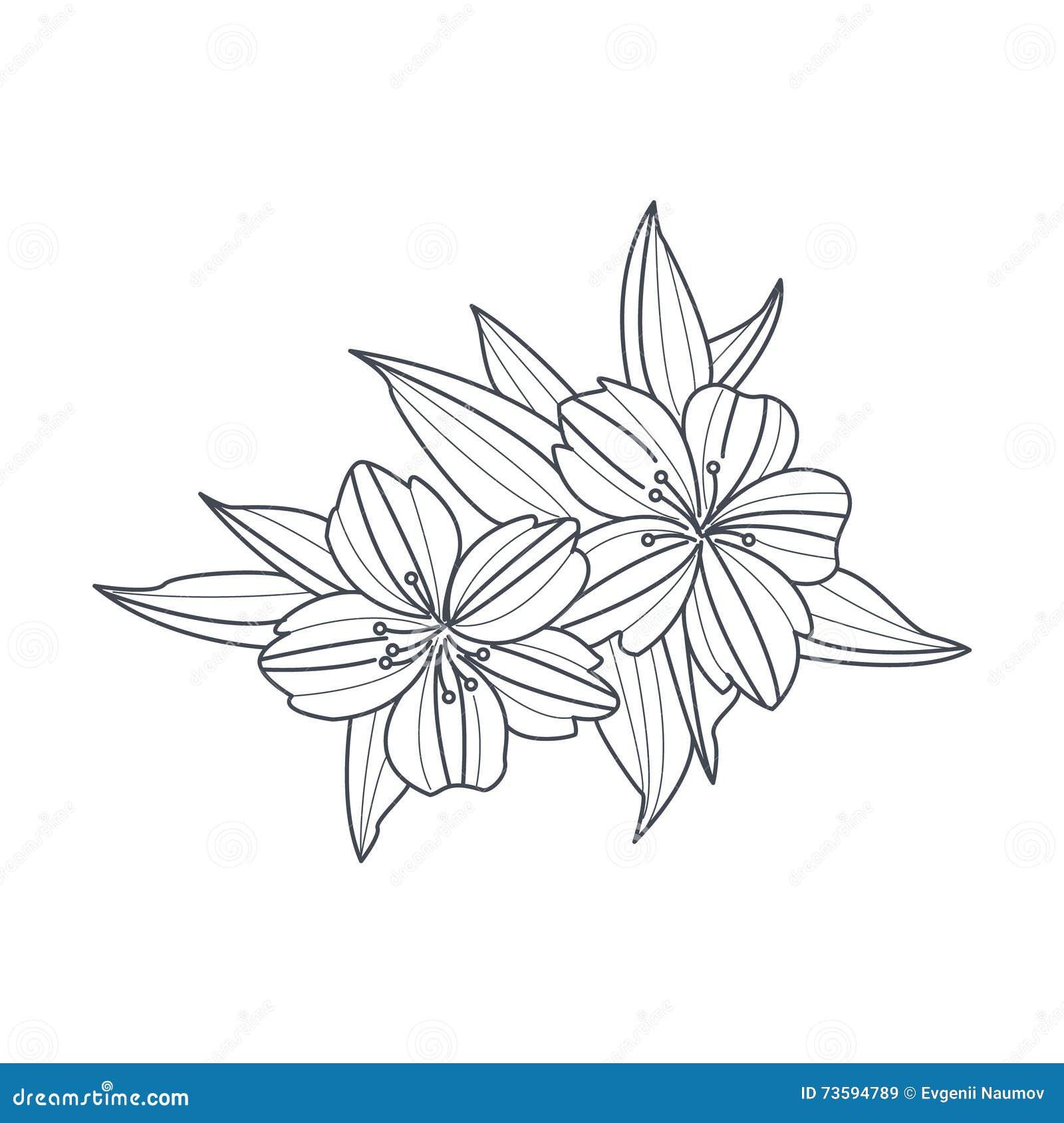 Dibujo Monocromático De La Flor Salvaje Para El Libro De Colorear ...