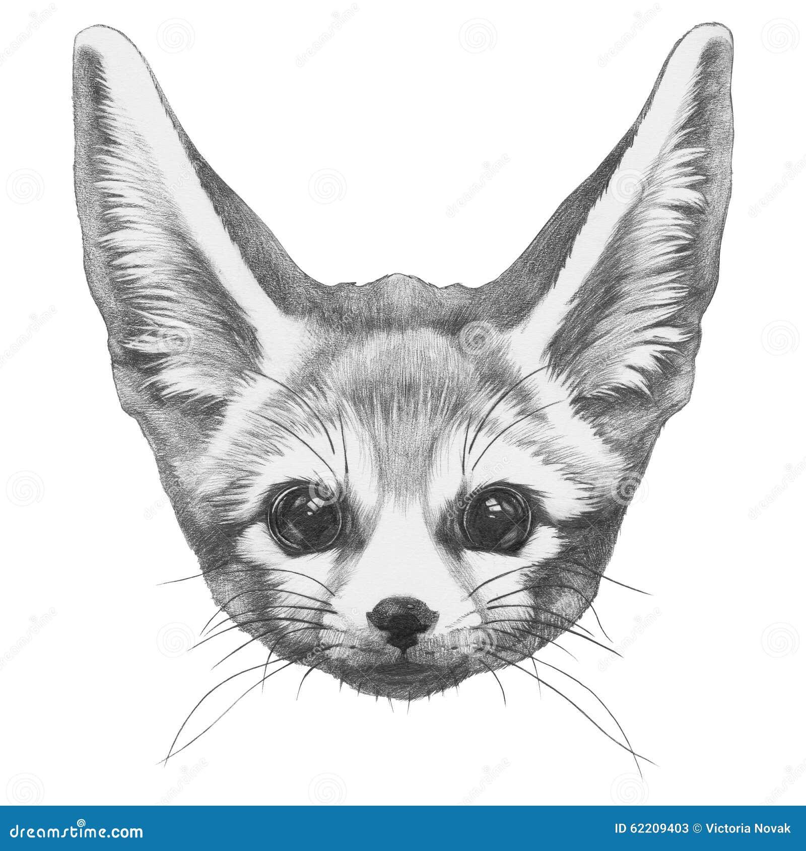 Dibujo original del Fox de Fennec