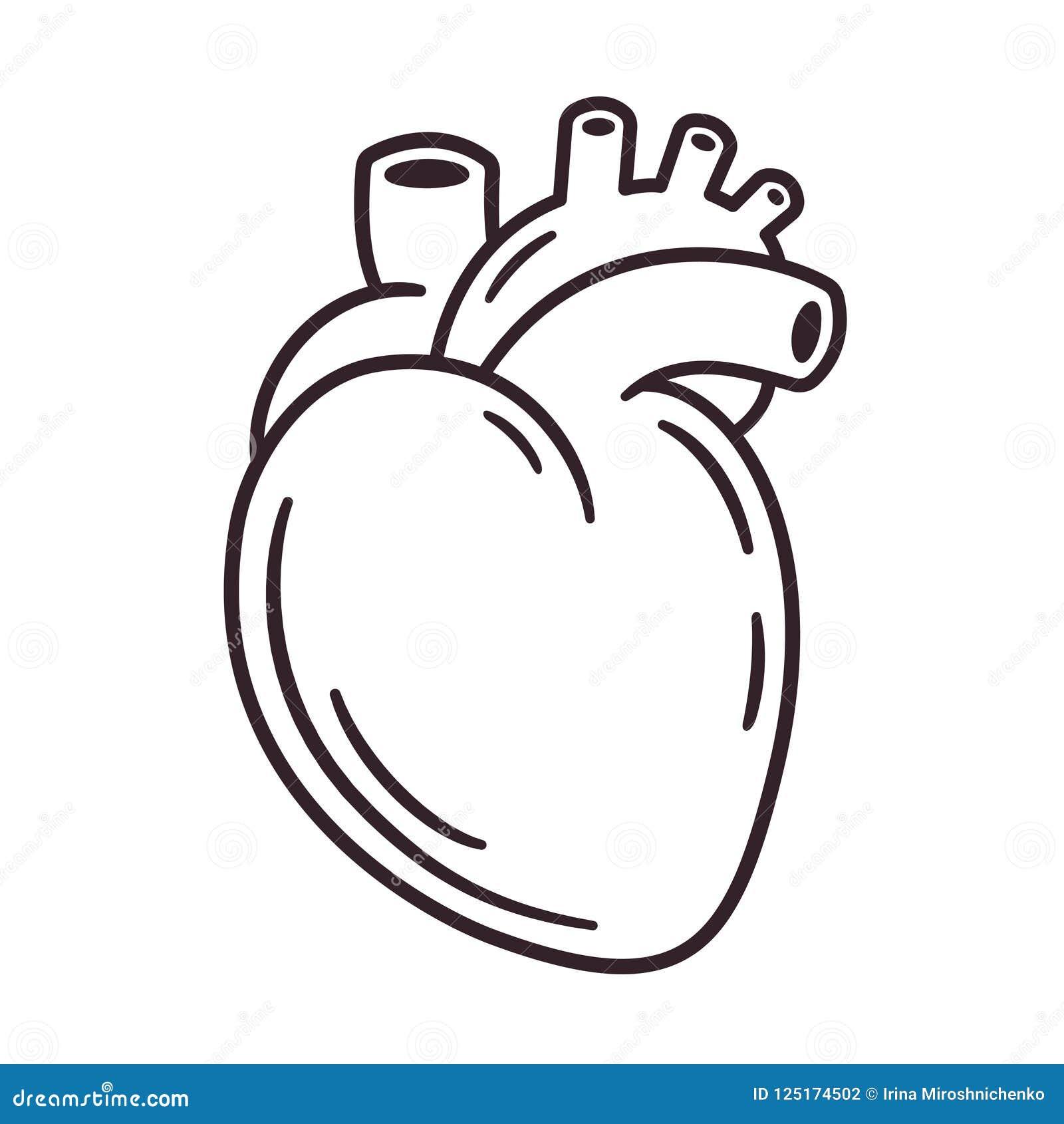 Dibujo Realista Del Corazón Ilustración Del Vector Ilustración De