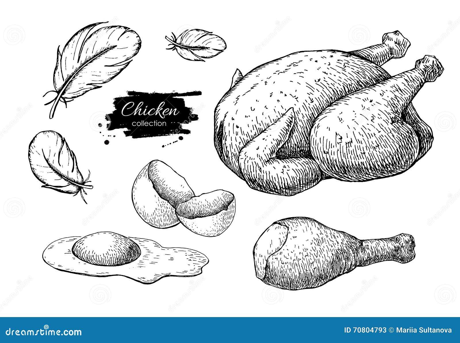 Dibujos De Los Productos De Cultivo Del Pollo Del Vector C Entera ...