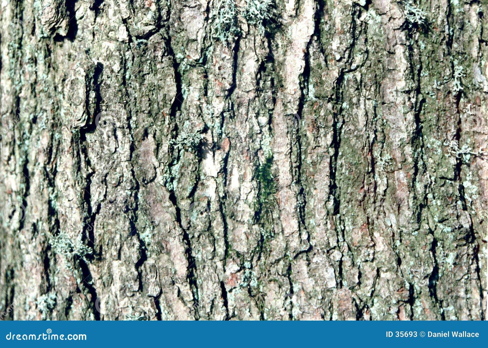 Dichte omhooggaand van de boom
