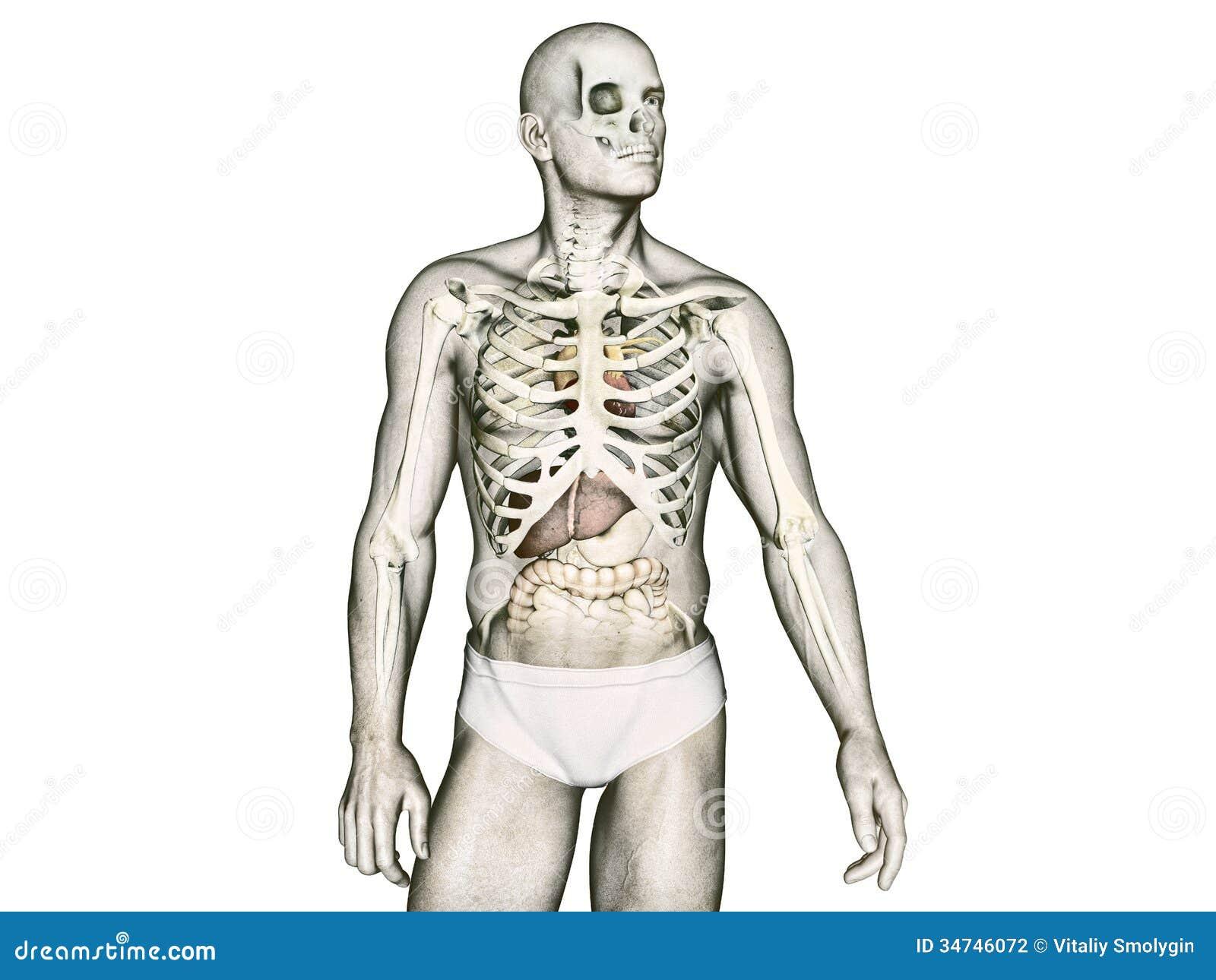 Ziemlich Grundbegriffe Der Anatomie Des Menschlichen Körpers Bilder ...