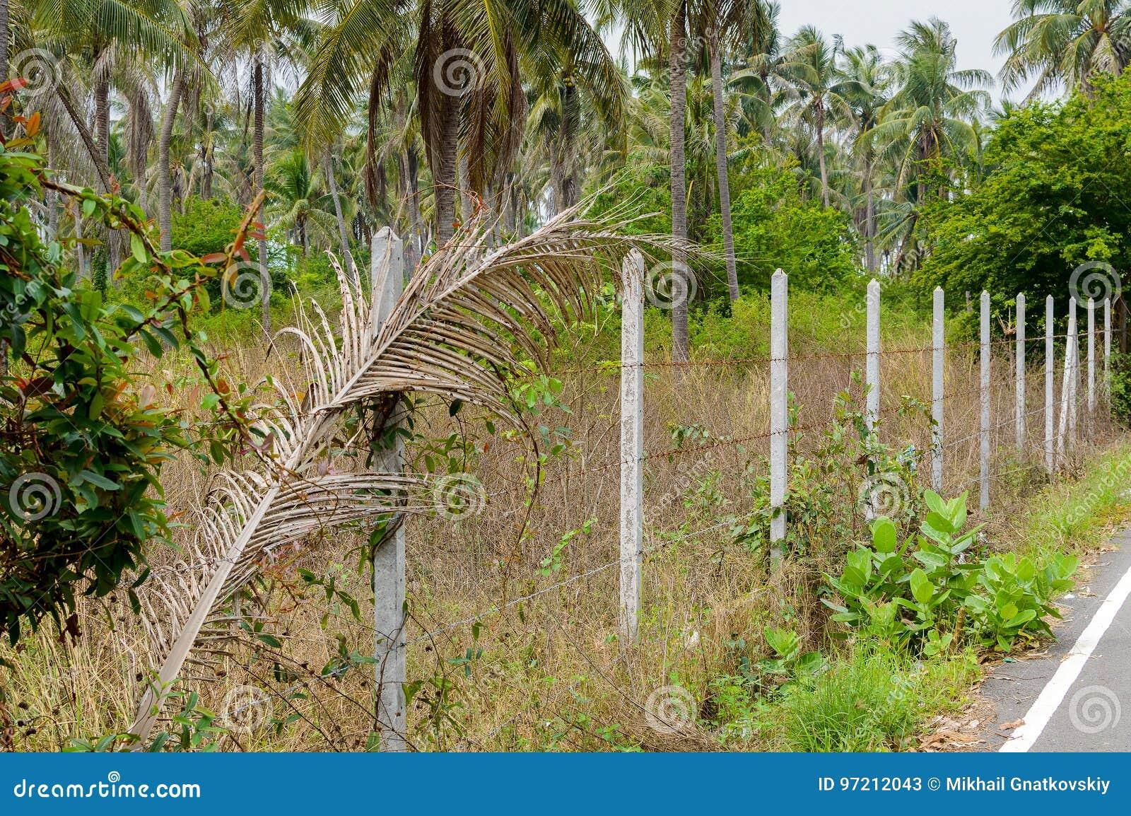 Die Ausgerichteten Betonpfosten Errichten Einen Zaun Des
