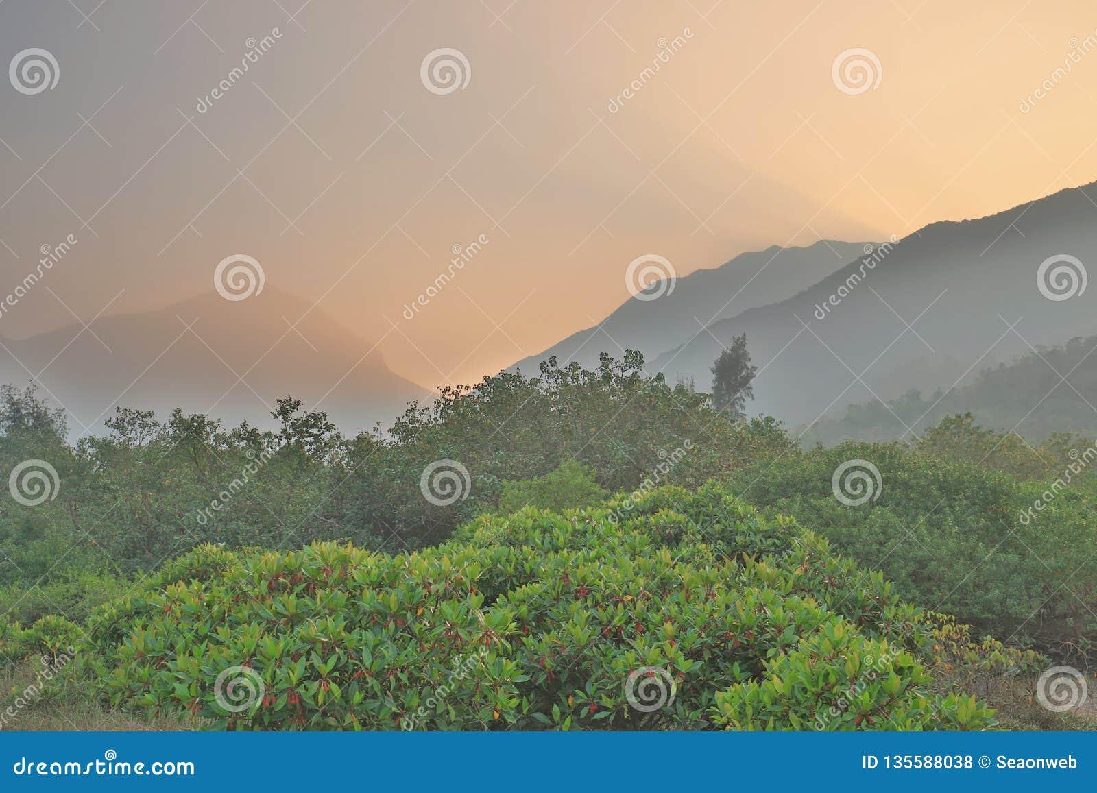 Die Beschaffenheit von Sumpfgebiet in Tung Chungs-Fluss