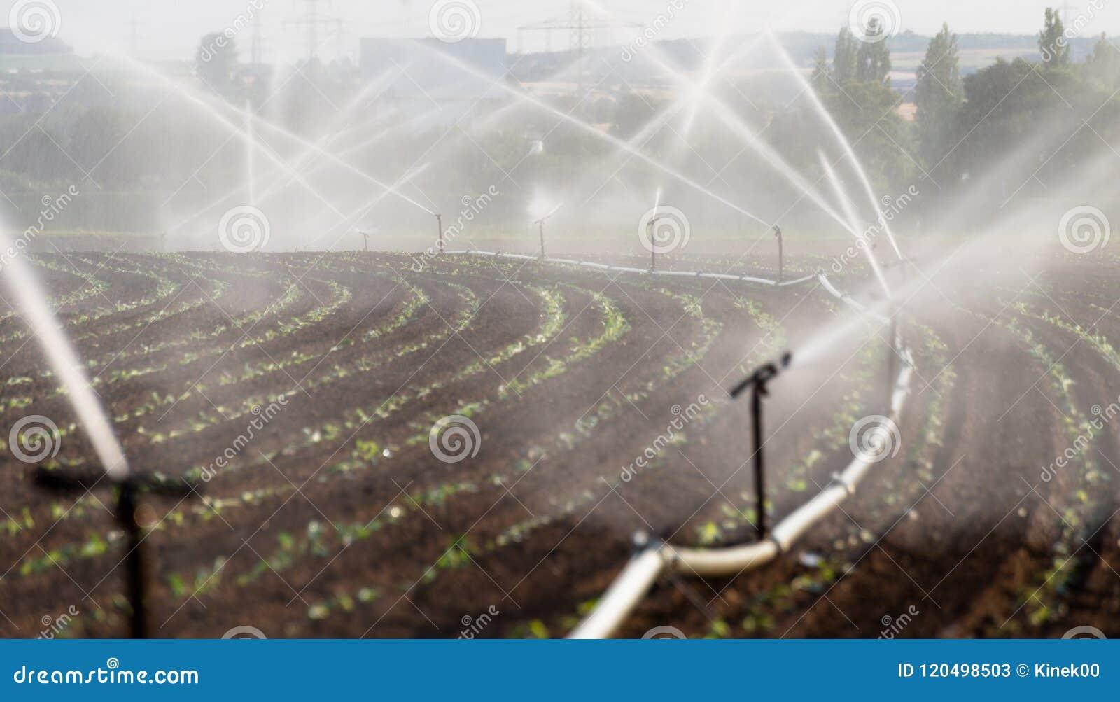 Die Bewässerung erntet in Westdeutschland mit Bewässerungssystem unter Verwendung der Berieselungsanlagen auf einem bebauten Gebi