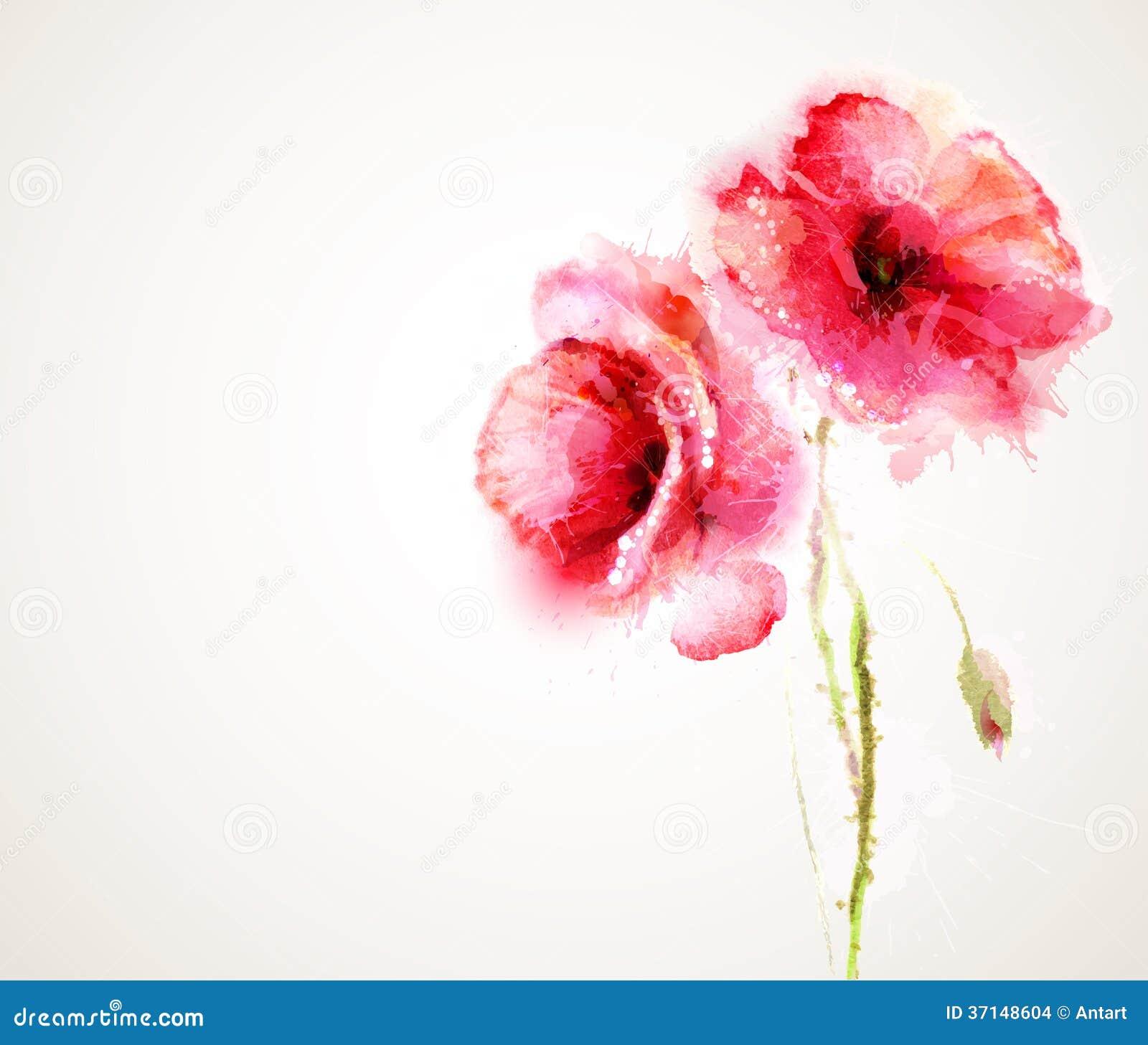 Die blühenden roten Mohnblumen