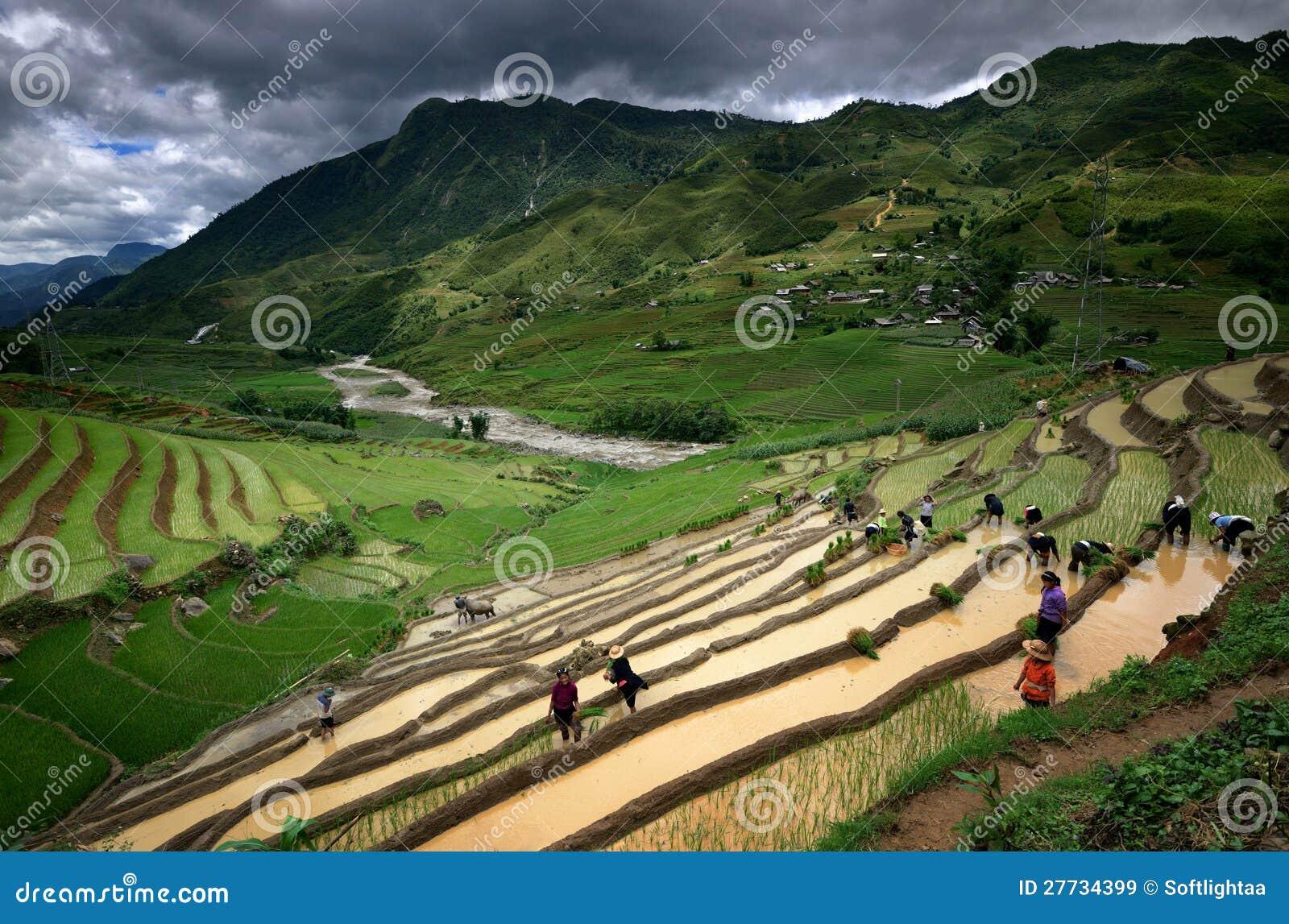 Die Dorfbewohner, die in den Reisterrassen arbeiten, nähern sich Sapa
