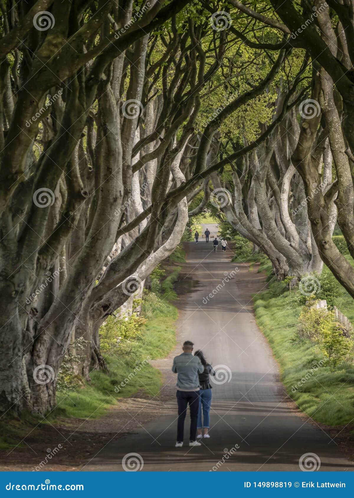 Die dunklen Hecken - ein berühmter Standort in Nordirland - STRANOCUM, VEREINIGTES KÖNIGREICH - 12. MAI 2019