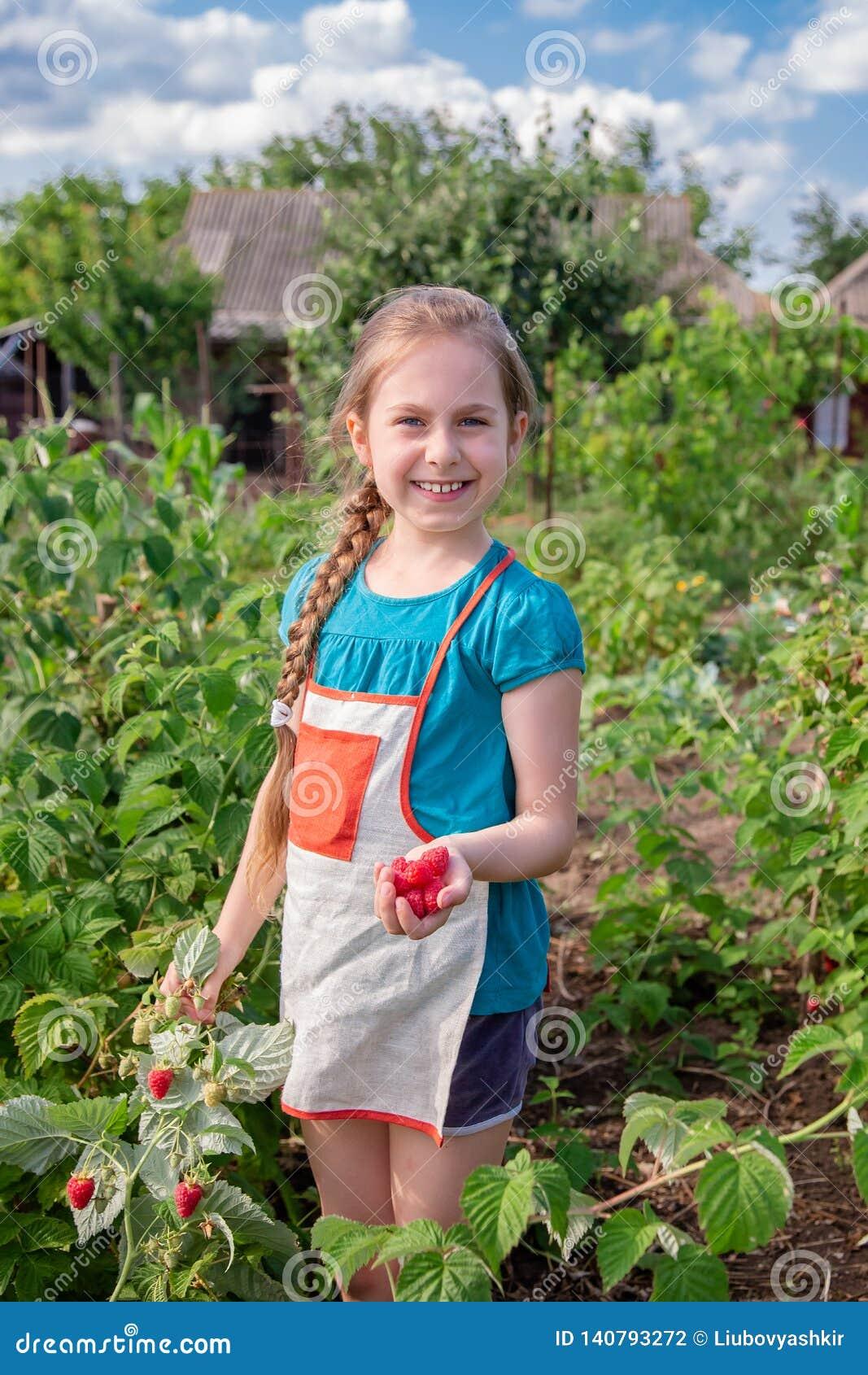 Die Erntehimbeeren der Kinder Ein nettes kleines Mädchen sammelt frische Früchte auf einem organischen Himbeerbauernhof Im Garten