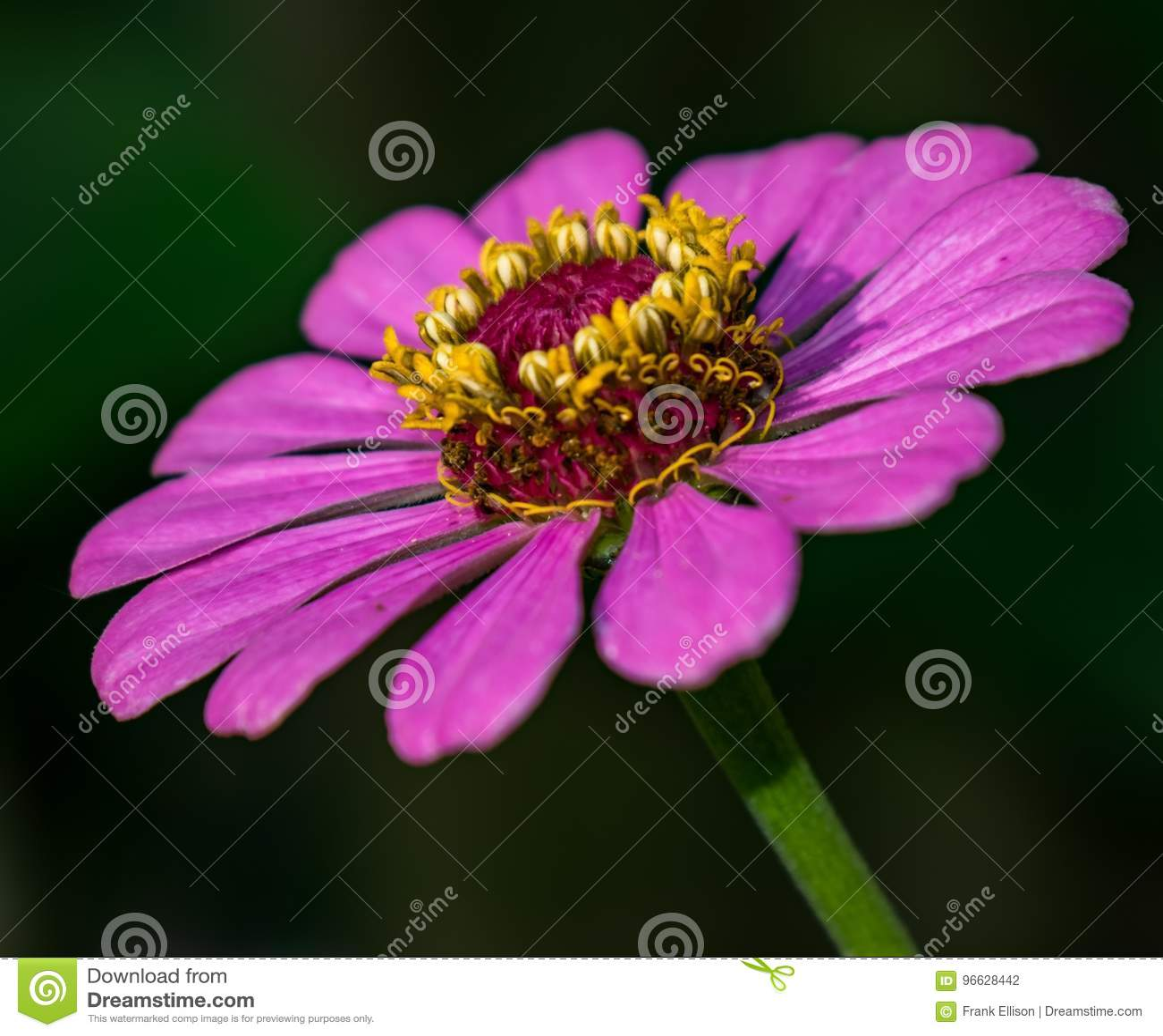 Die Farben des Purpurs