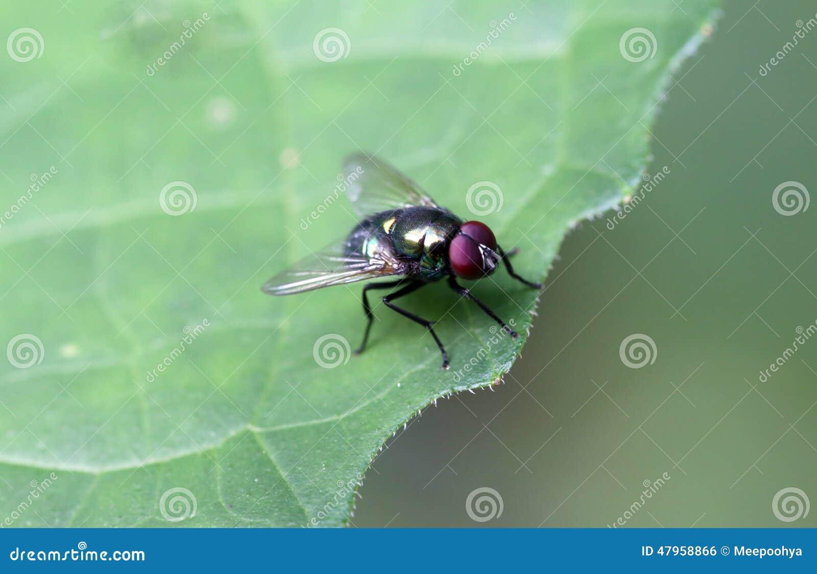 Die Fliegen