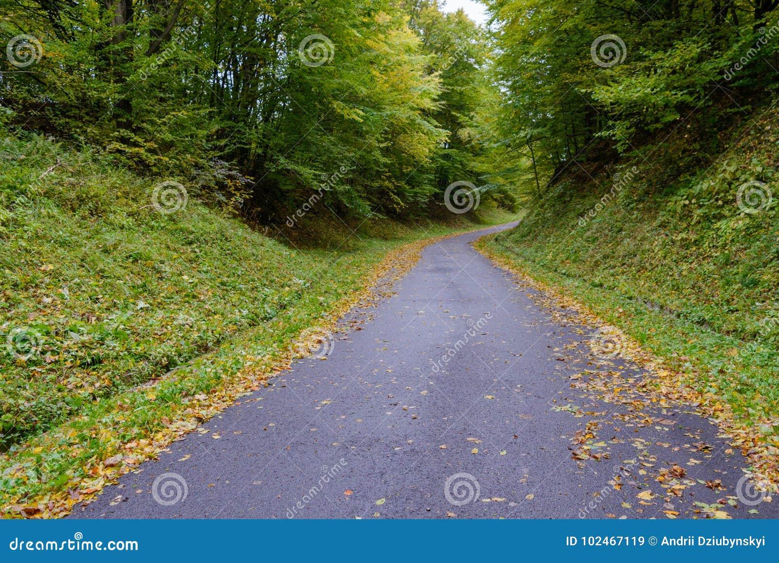 Die gepflasterte Straße geht unten zur Unterseite, von der die gelben Apfelblätter liegt