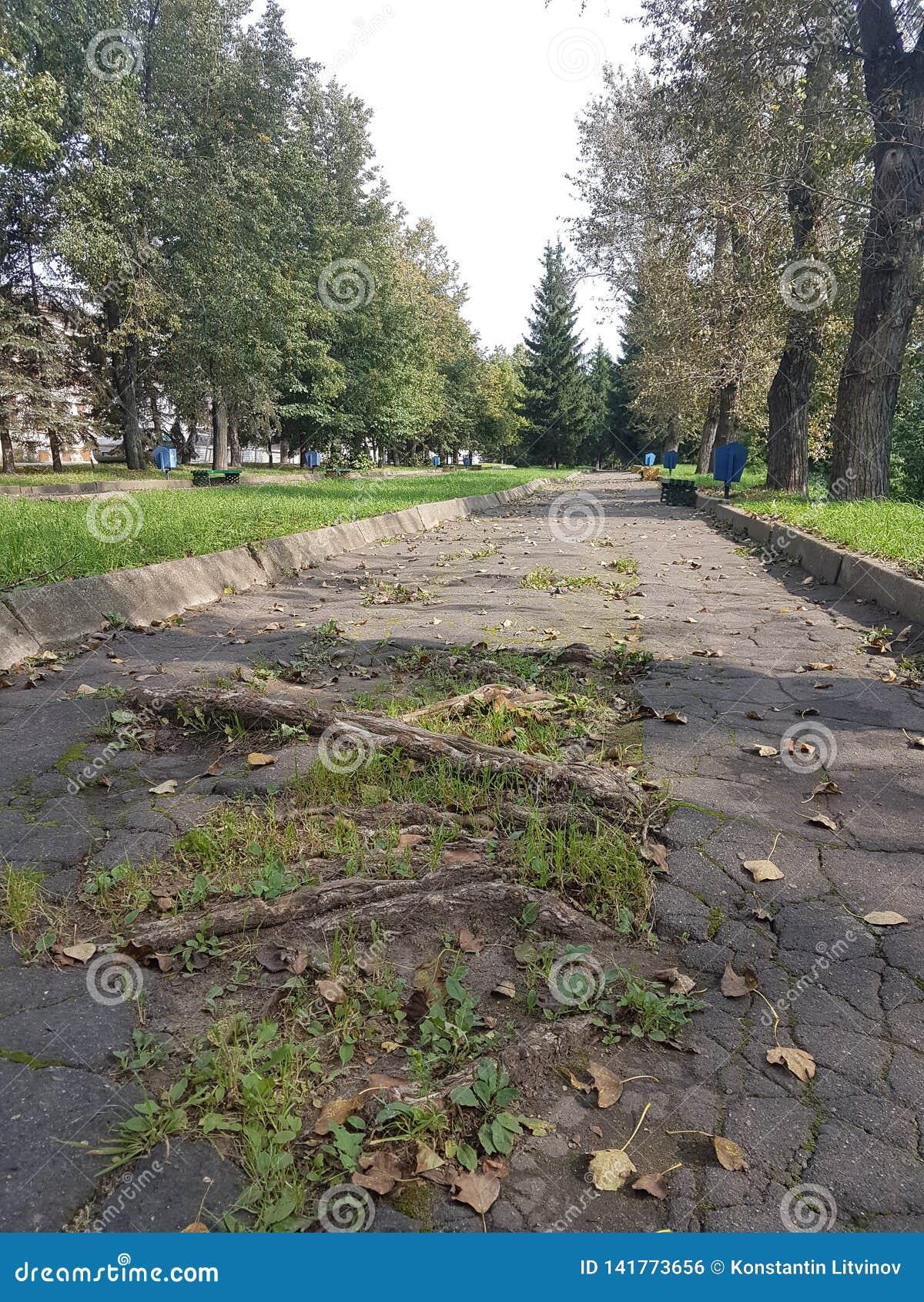 Die Gruben und die Schlaglöcher auf einer Landstraße nach Regen im Sommer unter den grünen Bäumen, Russland
