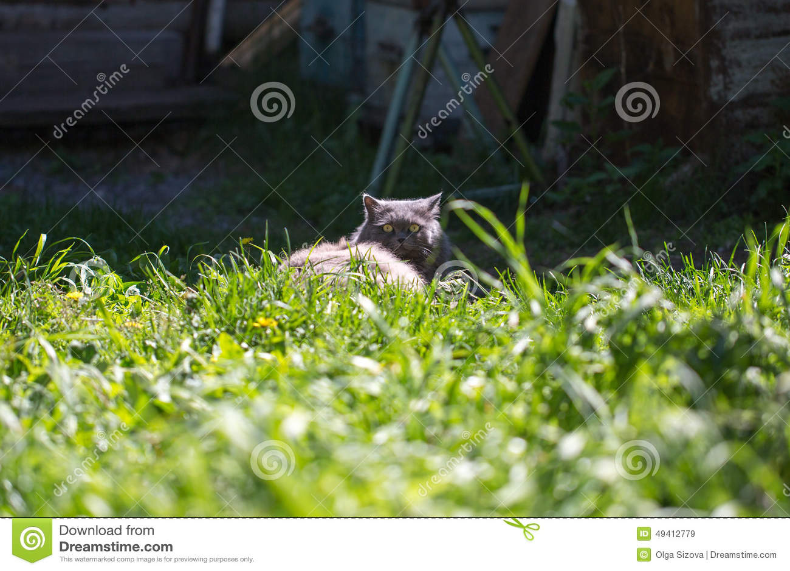 Download Die Katze auf einem Gras stockbild. Bild von hintergrund - 49412779