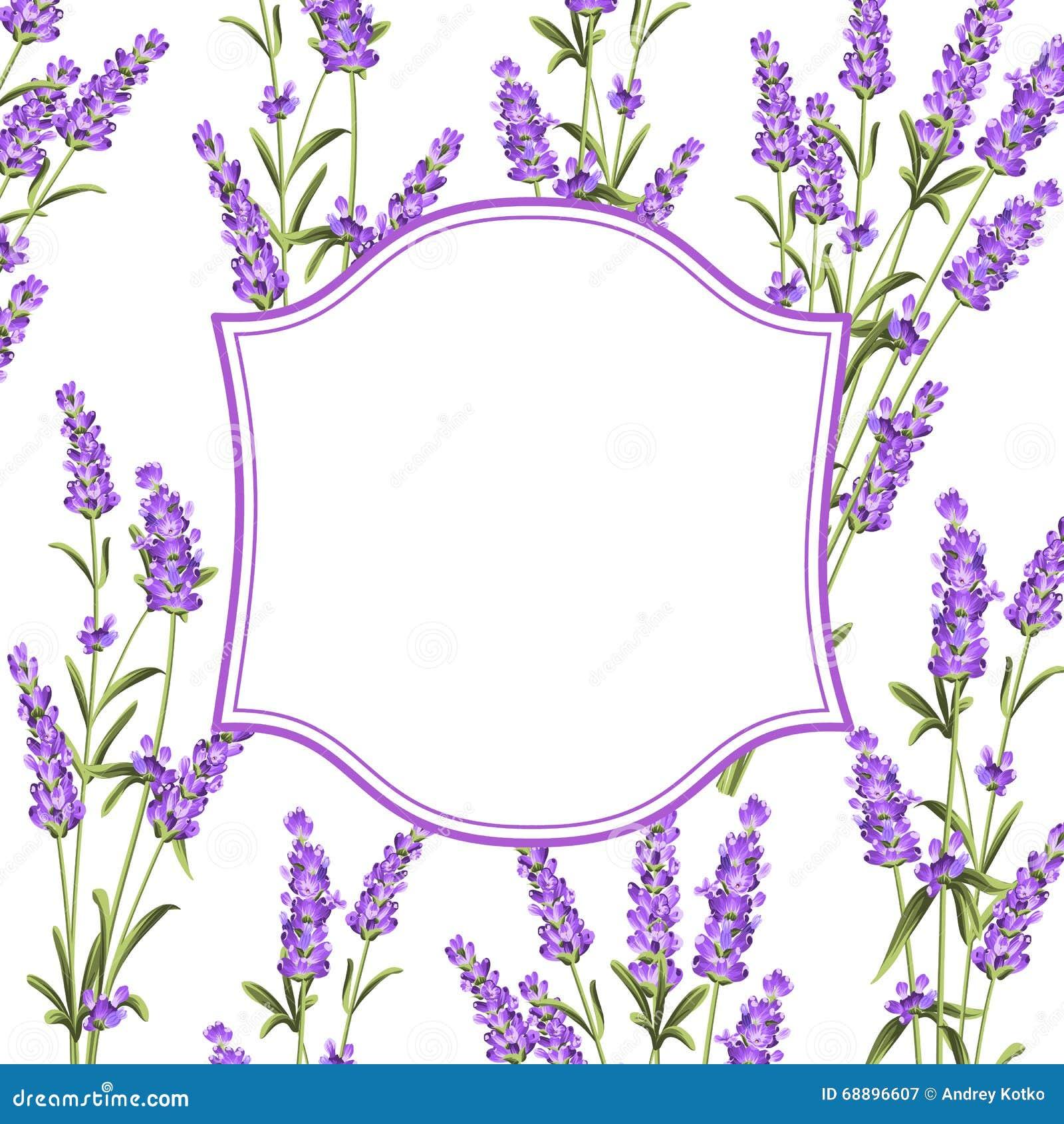Die Lavendelrahmenlinie vektor abbildung. Illustration von botanisch ...