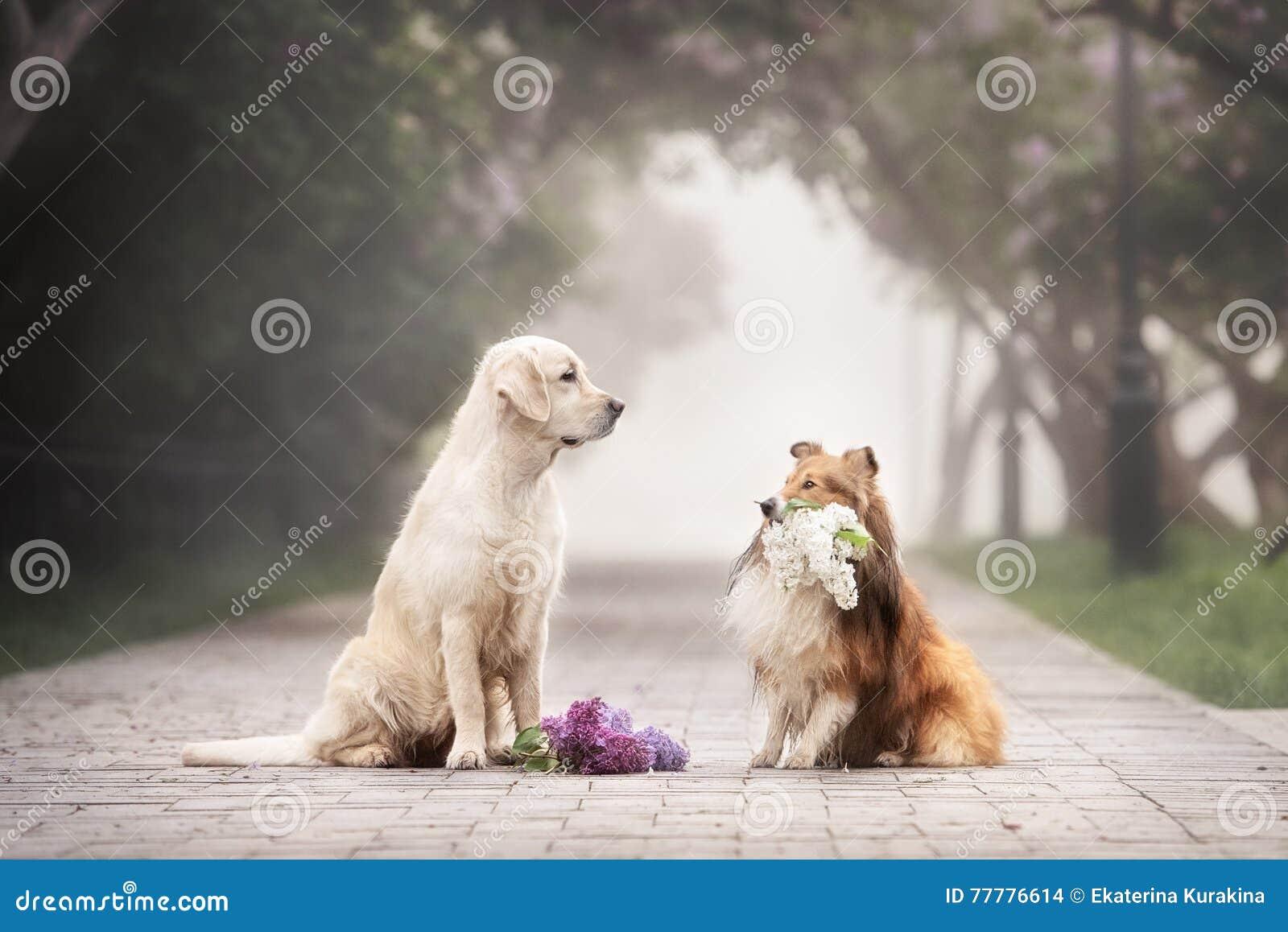 Die Liebesgeschichte von zwei Hunden