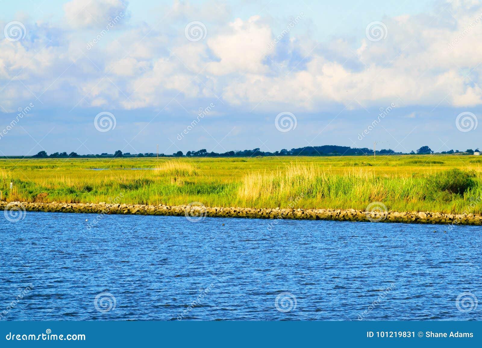 Die Louisiana-Sumpfgebiete