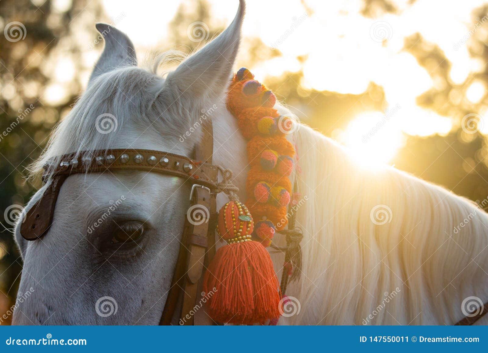 Die Mähne der schönen weißen Stallionss